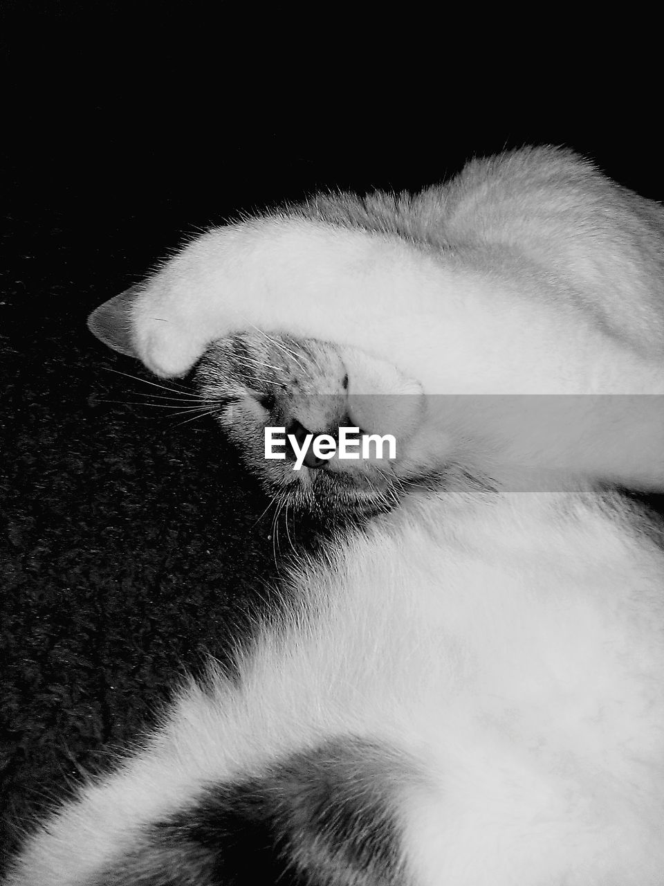 one animal, pets, domestic cat, animal themes, domestic animals, feline, mammal, sleeping, eyes closed, cat, close-up, indoors, no people, relaxation, paw, whisker, day