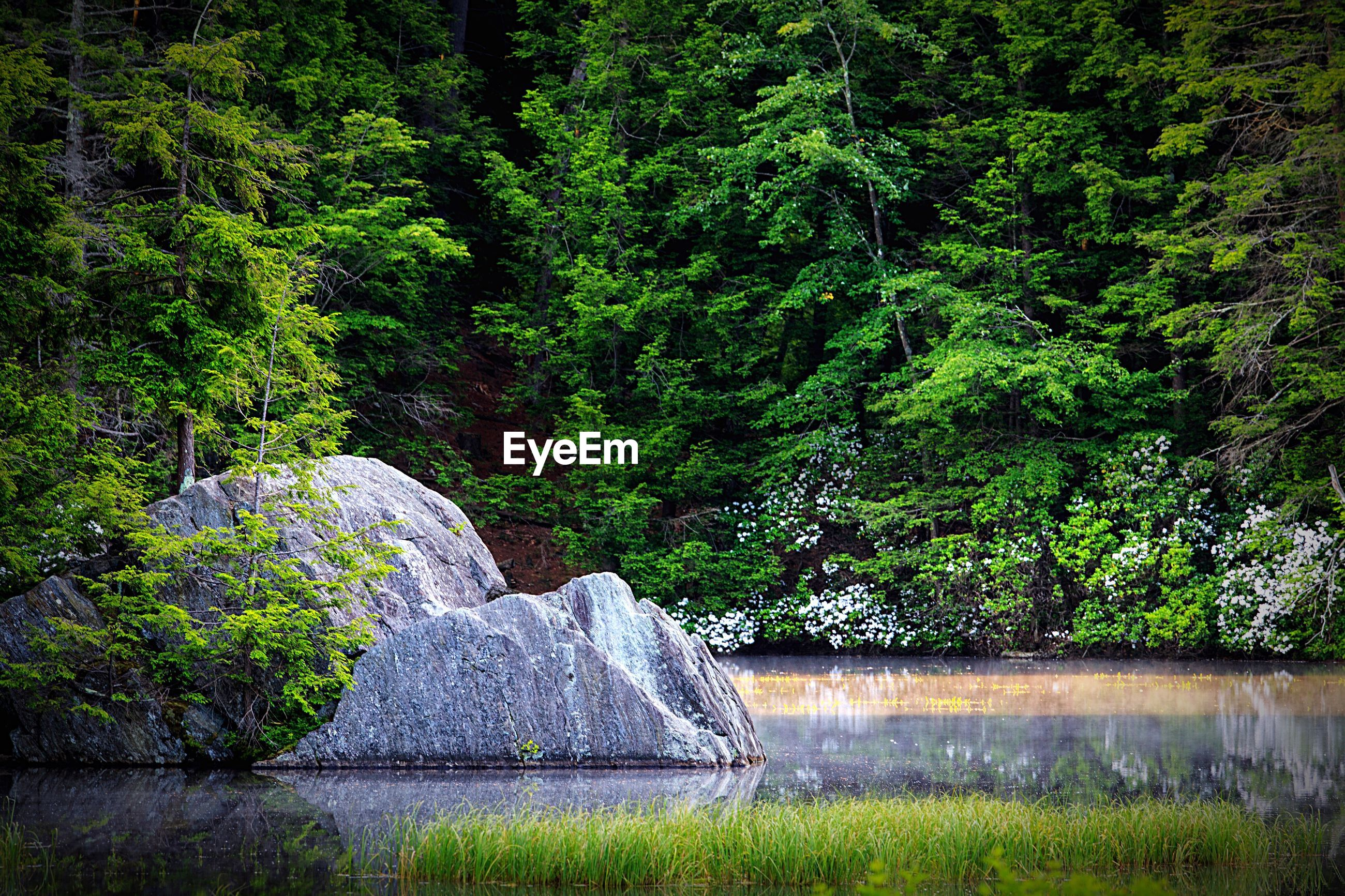 tree, water, growth, green color, plant, nature, tranquility, beauty in nature, park - man made space, lush foliage, day, tranquil scene, rock - object, outdoors, scenics, green, fountain, forest, formal garden, no people