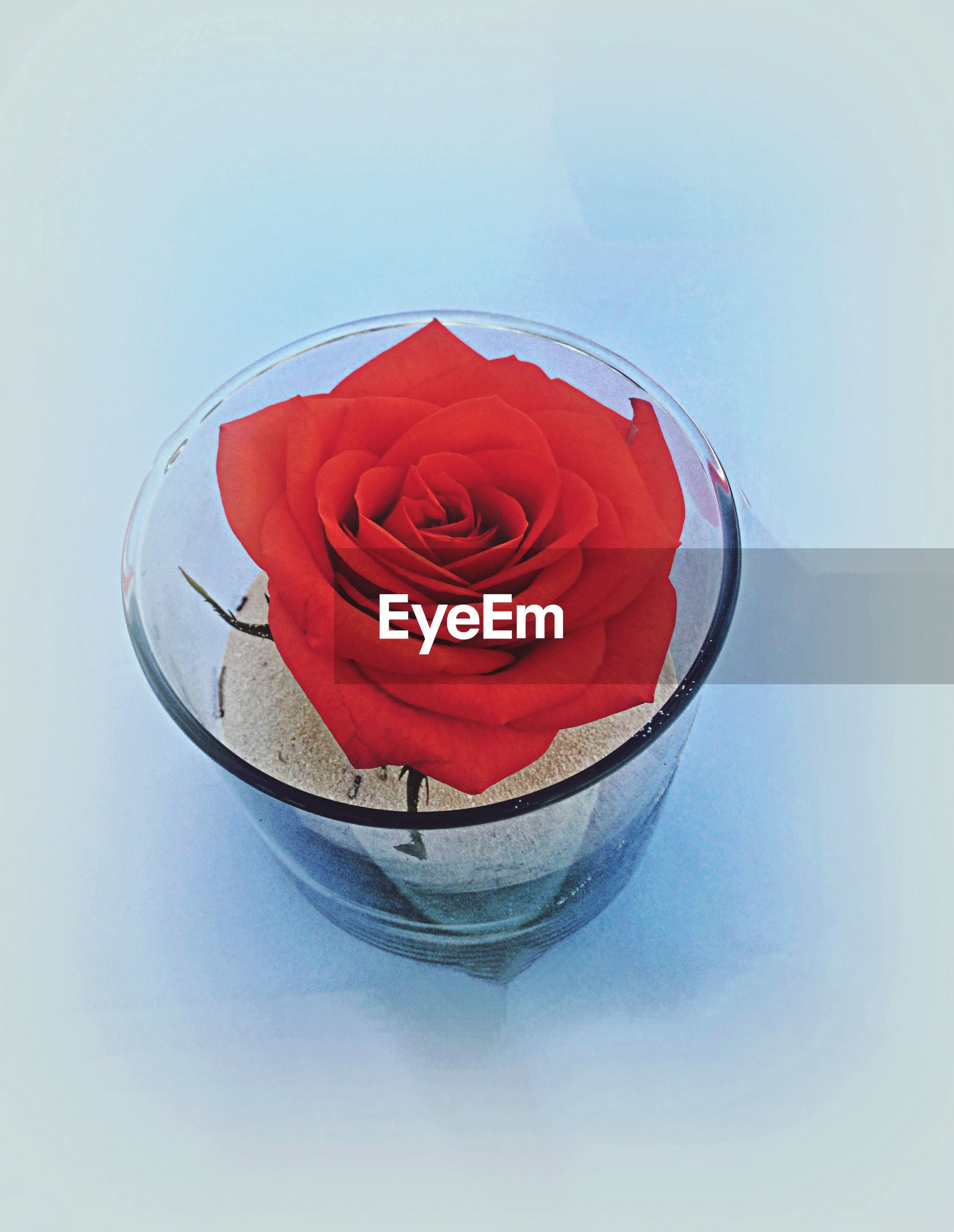 Rose flower in glass with sand
