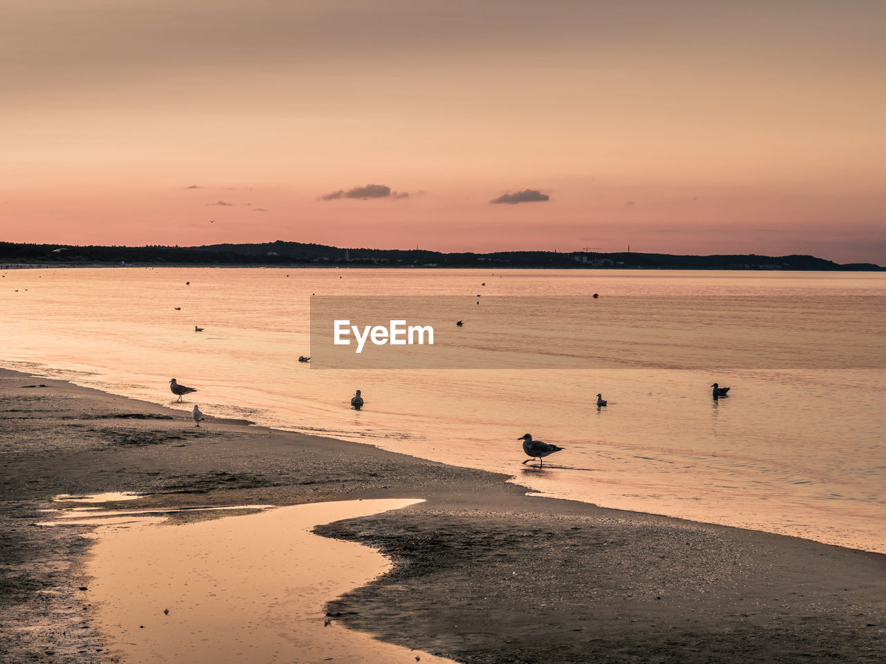 High angle view of birds on beach against sky during sunset