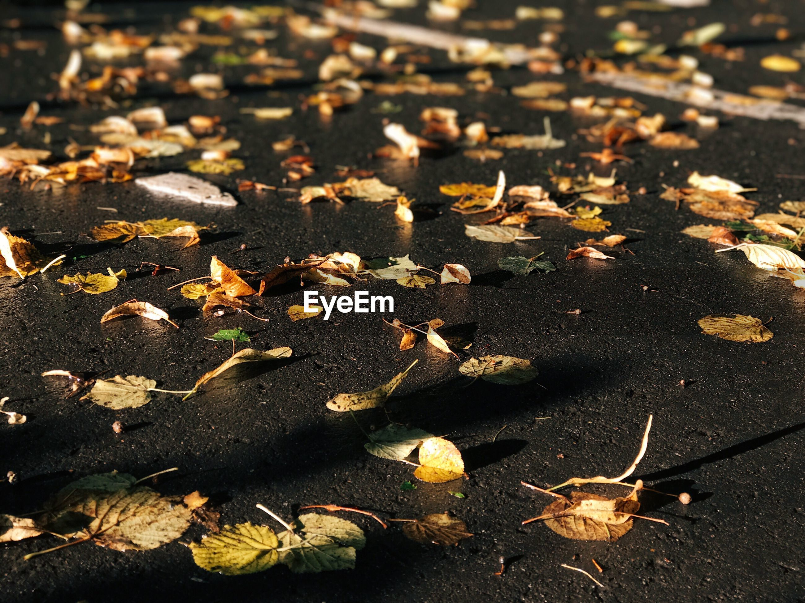 leaf, autumn, change, dry, leaves, nature, fallen, outdoors, no people, day, sunlight, maple leaf, maple, beauty in nature, tranquility, close-up, fragility