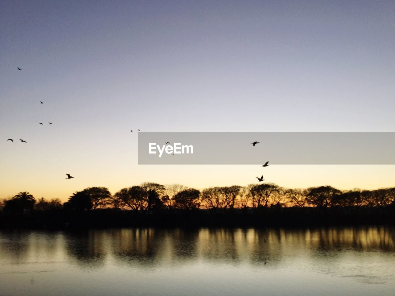flying, bird, sunset, animals in the wild, mid-air, animal themes, silhouette, nature, large group of animals, beauty in nature, reflection, animal wildlife, flock of birds, water, scenics, wildlife, clear sky, lake, outdoors, tree, tranquil scene, sky, tranquility, no people, spread wings, day