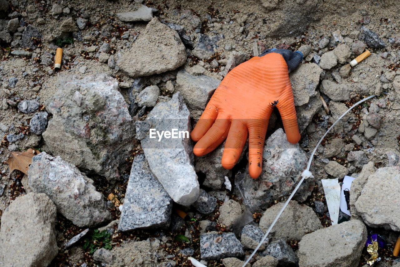 solid, rock - object, rock, high angle view, day, nature, no people, outdoors, orange color, land, dirt, animal, animal themes, close-up, textured, mushroom, vegetable, fungus, one animal, carrot, poisonous