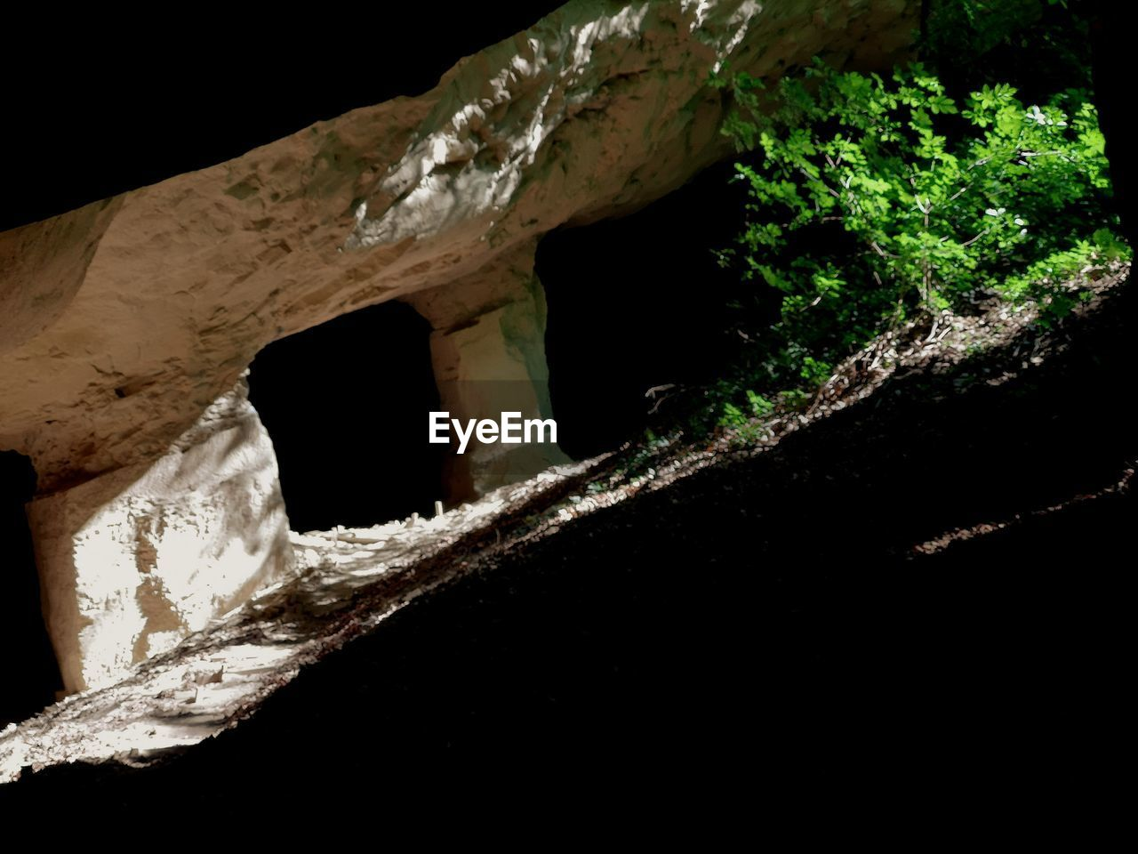 close-up, no people, nature, plant, tree, outdoors, black background, night, wood - material, focus on foreground, selective focus, hole, plant part, growth, leaf, dark, window, cave