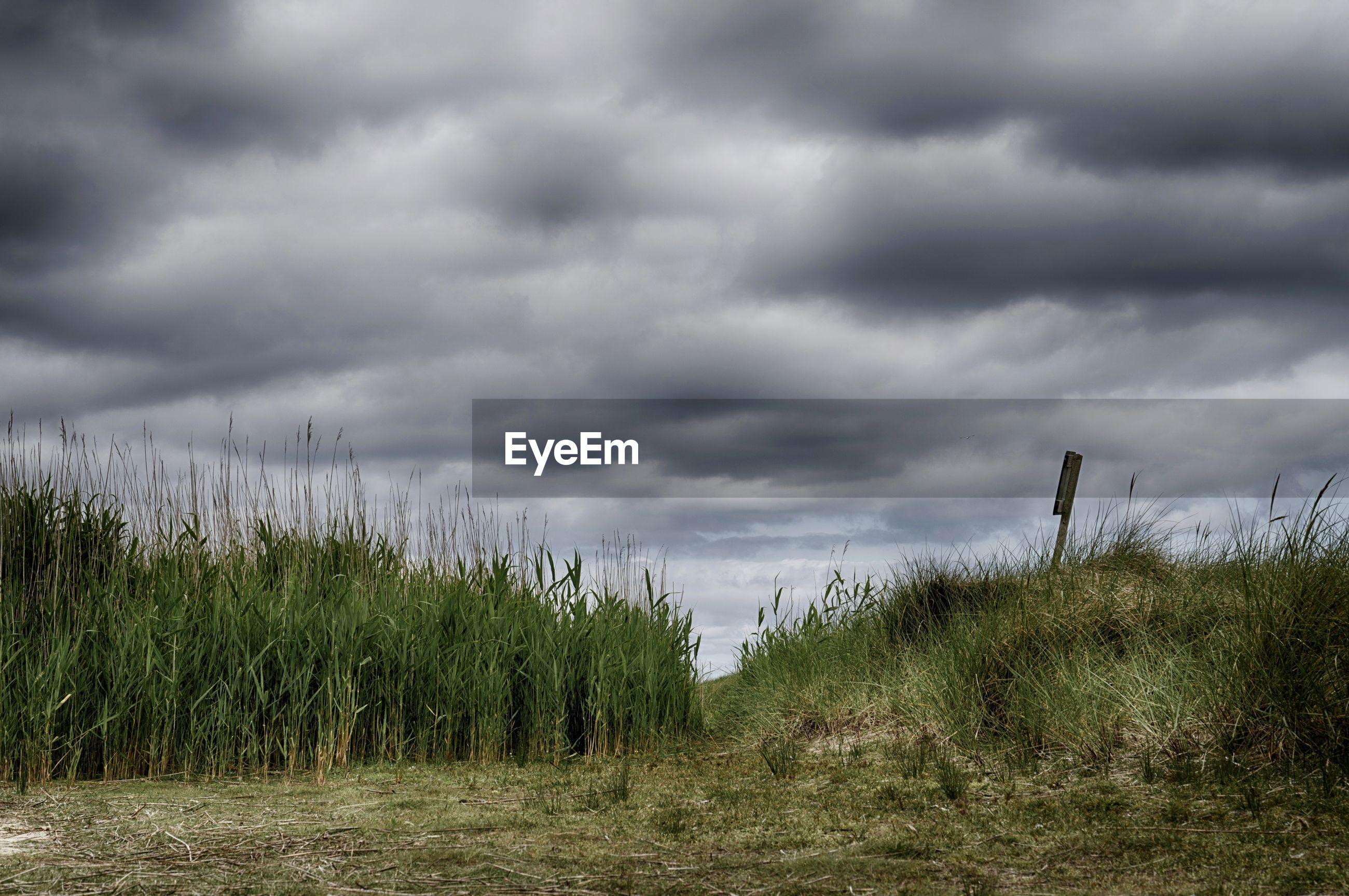 GRASSY FIELD AGAINST CLOUDY SKY