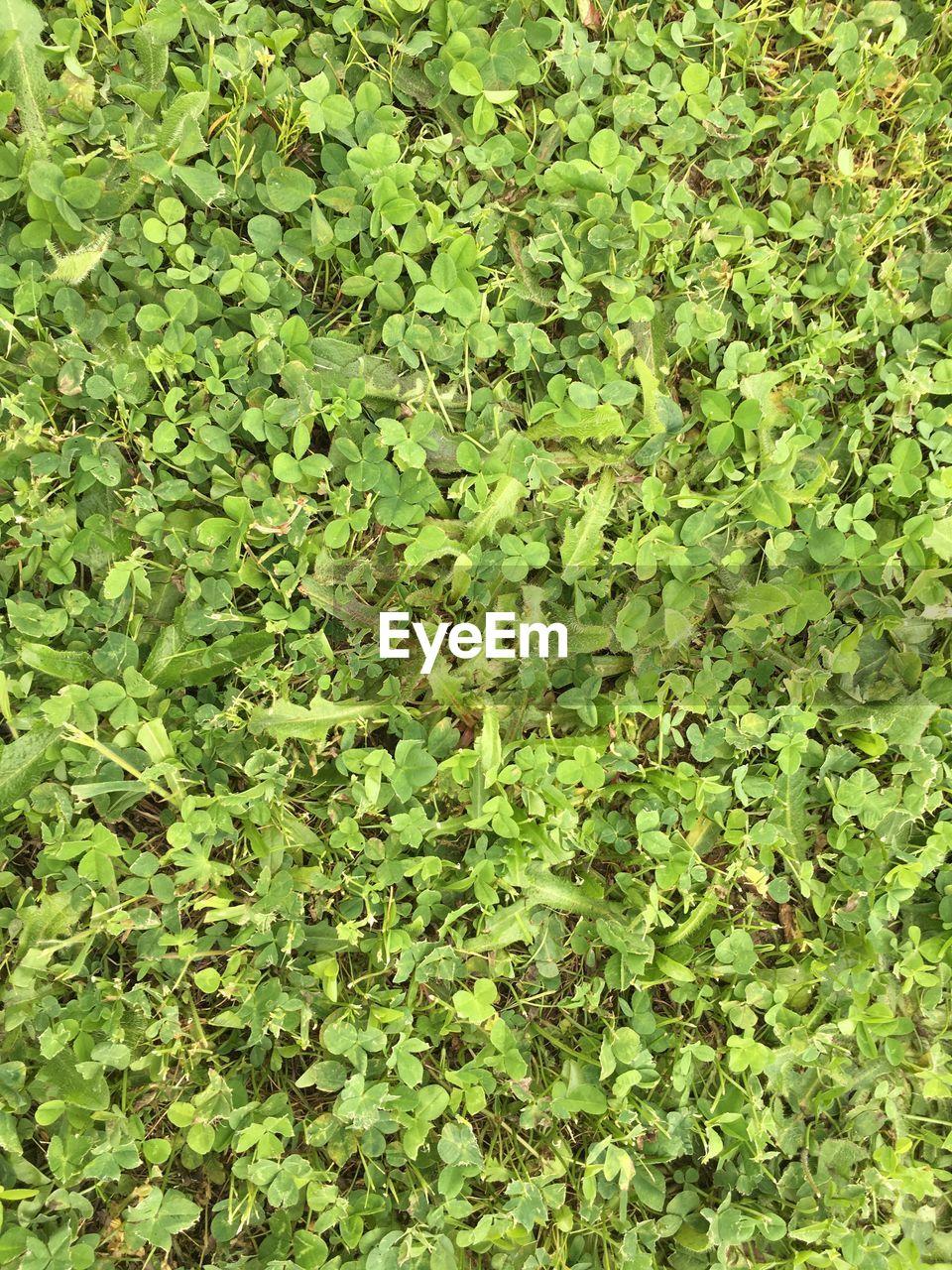leaf, green color, abundance, nature, full frame, day, no people, outdoors, freshness