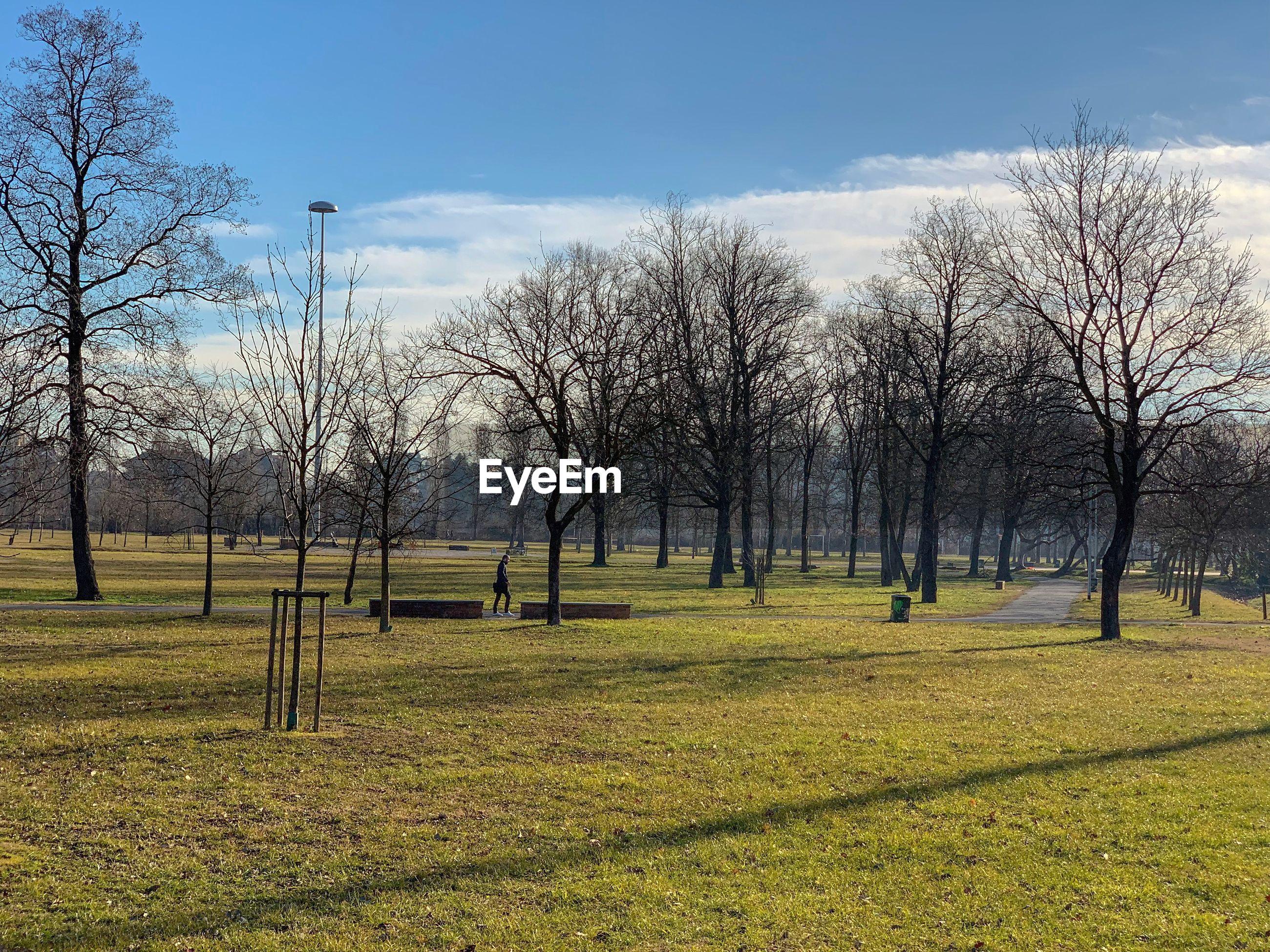 Man walking by bare trees on field against sky