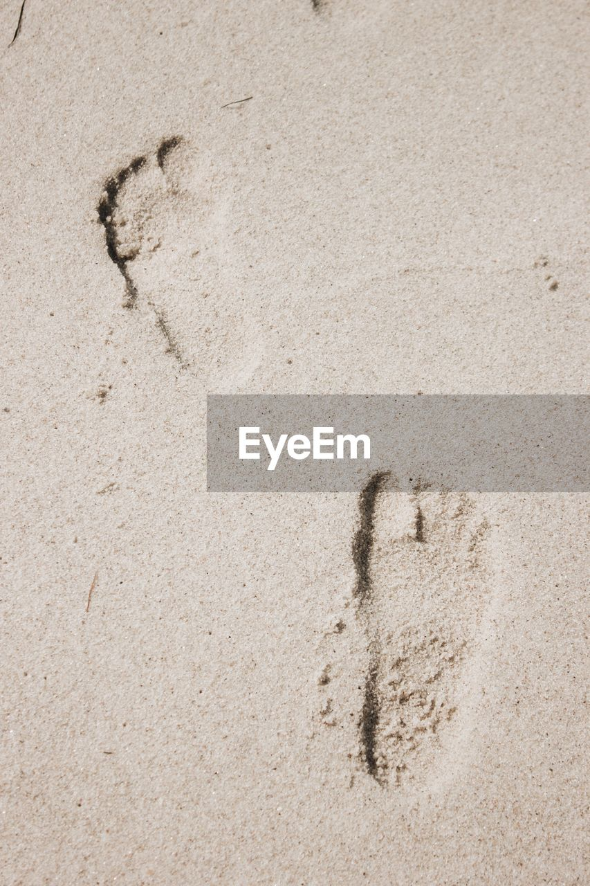 sand, land, footprint, no people, beach, full frame, print, nature, high angle view, track - imprint, day, backgrounds, textured, animal track, mystery, close-up, outdoors, beige, paw print, absence