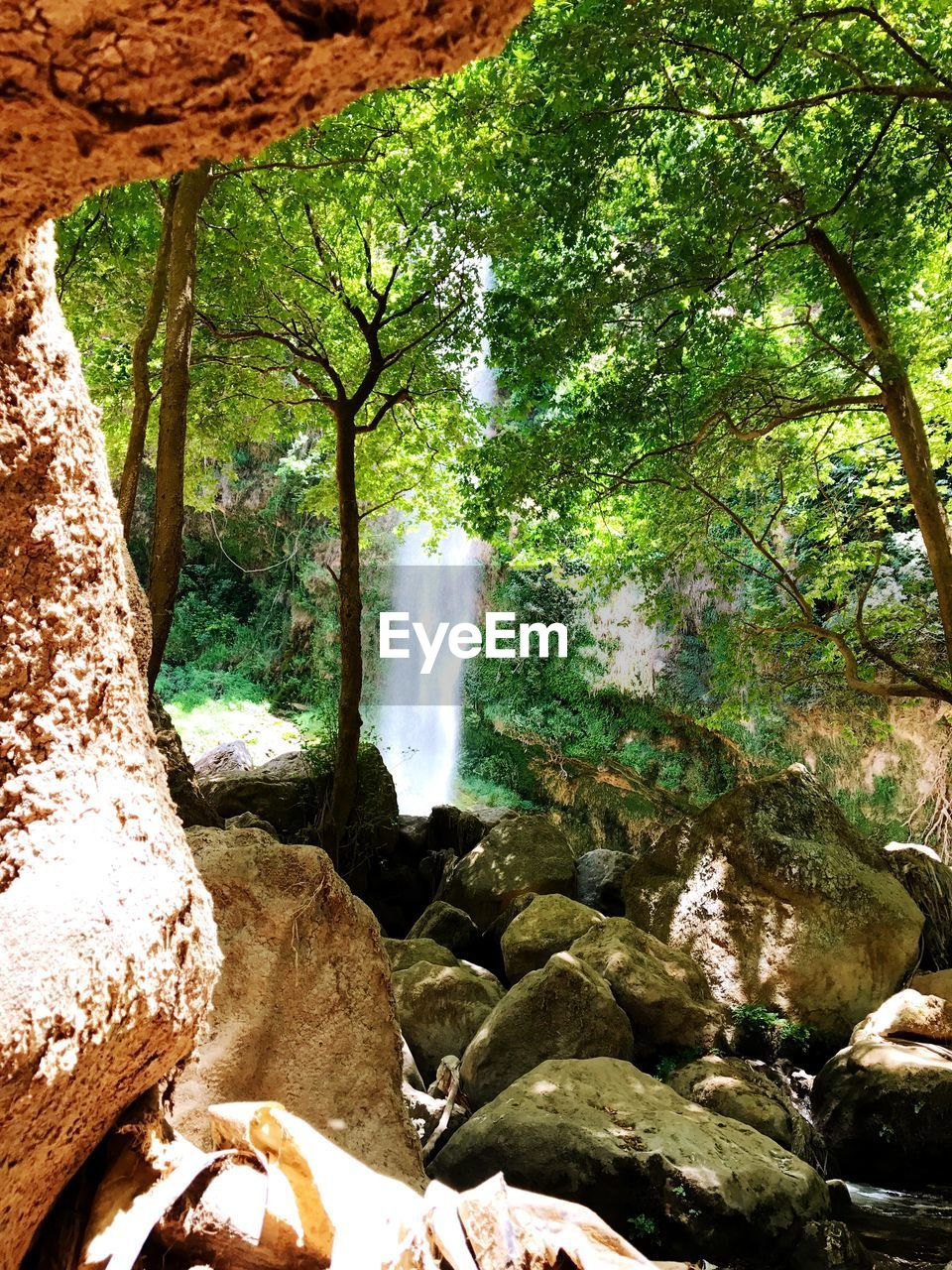 nature, rock - object, beauty in nature, tree, waterfall, water, scenics, forest, river, day, tranquility, no people, outdoors, branch