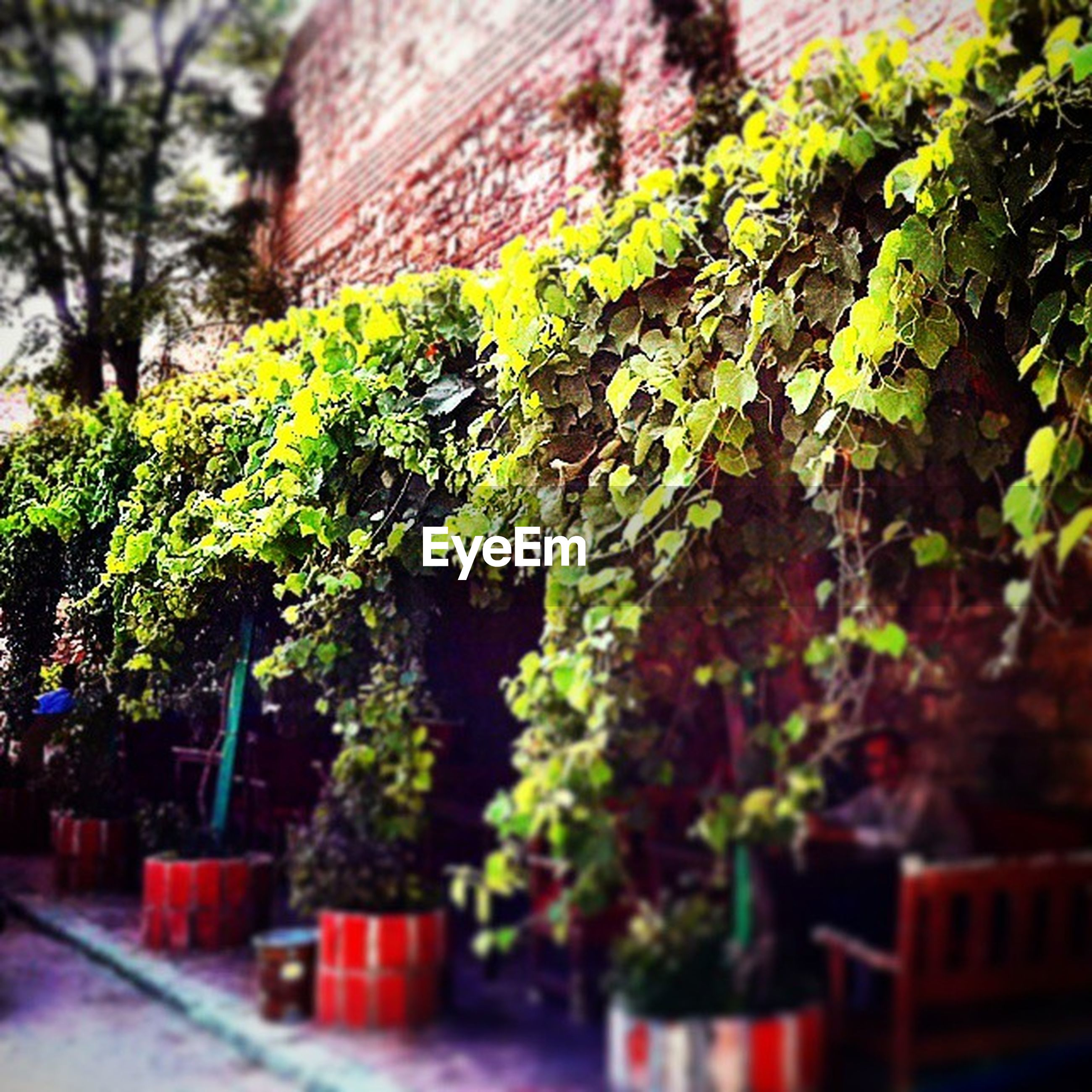 growth, tree, selective focus, plant, green color, leaf, built structure, building exterior, nature, house, focus on foreground, architecture, close-up, day, outdoors, ivy, no people, growing, low angle view, beauty in nature