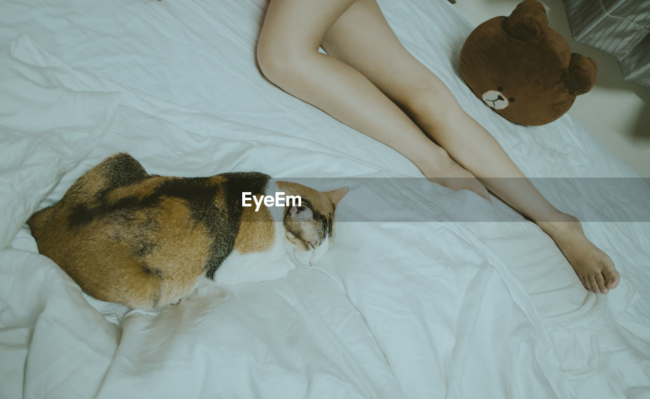 High angle view of cat and woman lying on bed