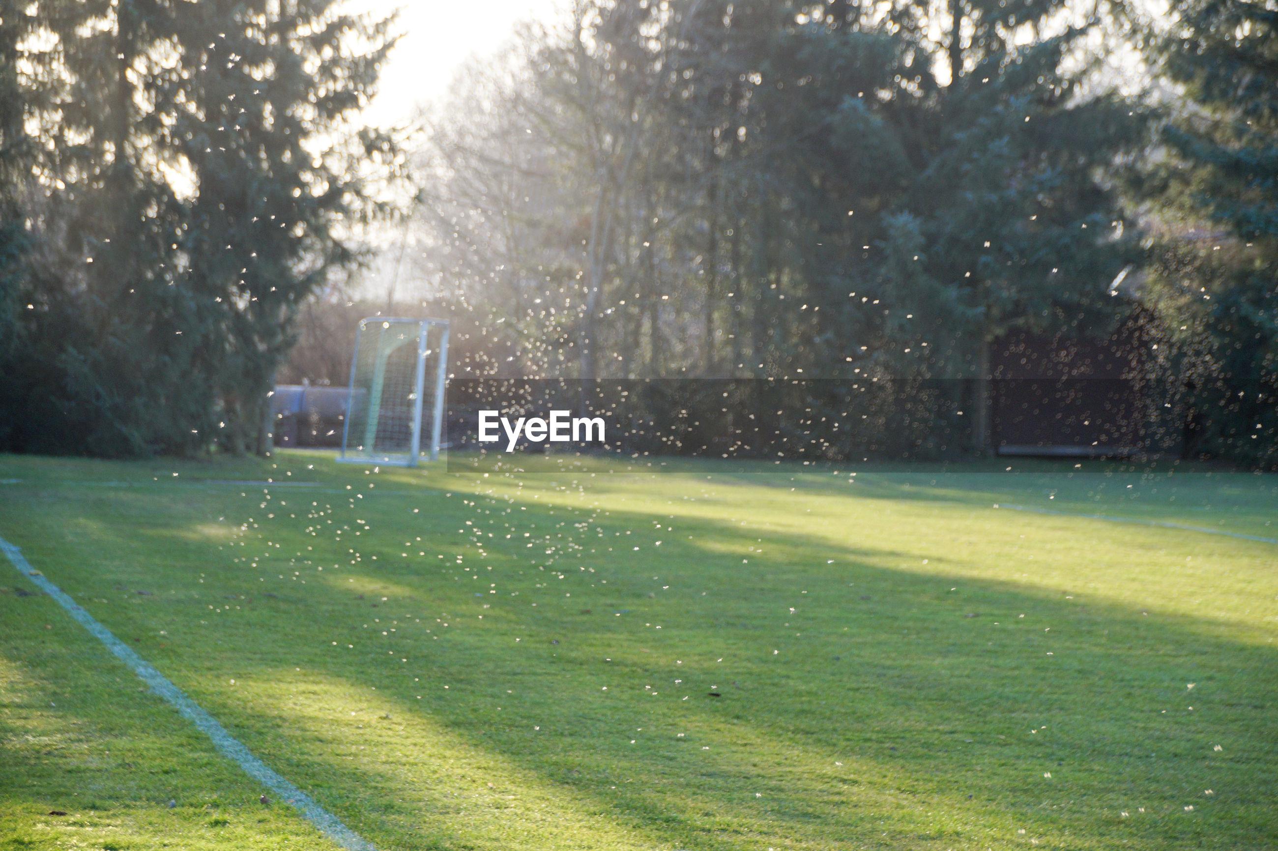 Water spraying over soccer field