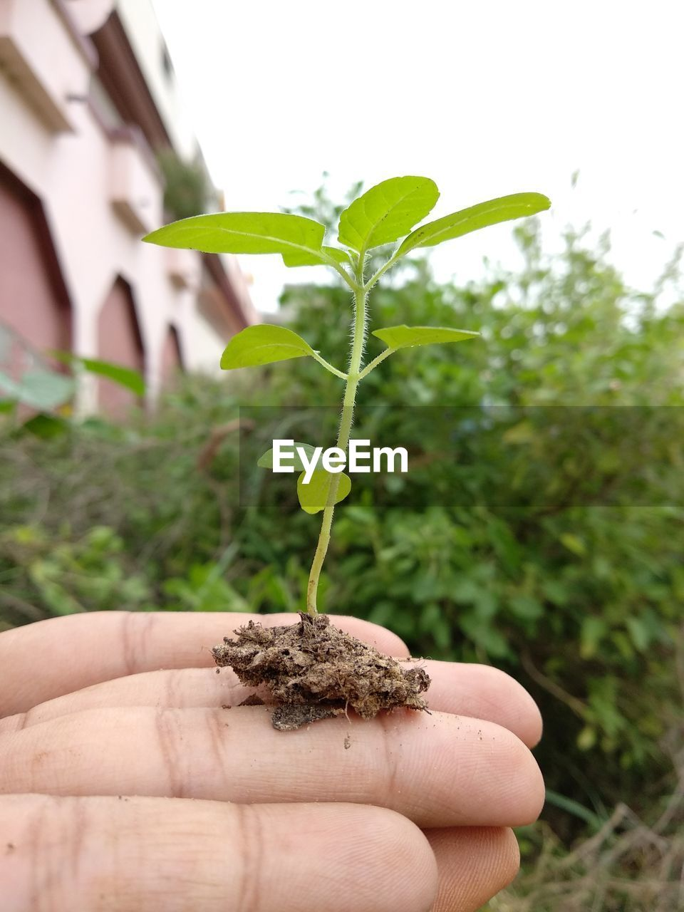 human hand, human body part, hand, one person, plant, growth, body part, plant part, nature, leaf, focus on foreground, human finger, finger, real people, holding, green color, close-up, unrecognizable person, day, beginnings, outdoors, small, care, human limb