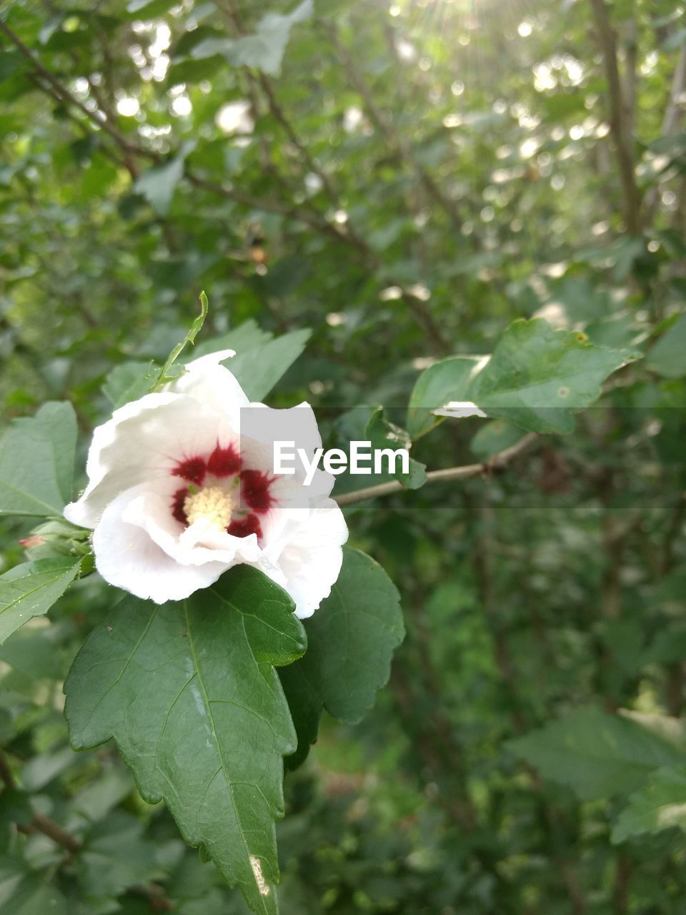 flower, growth, fragility, nature, petal, beauty in nature, white color, flower head, day, green color, plant, freshness, focus on foreground, outdoors, no people, leaf, close-up, pink color, one animal, blooming, tree, animal themes