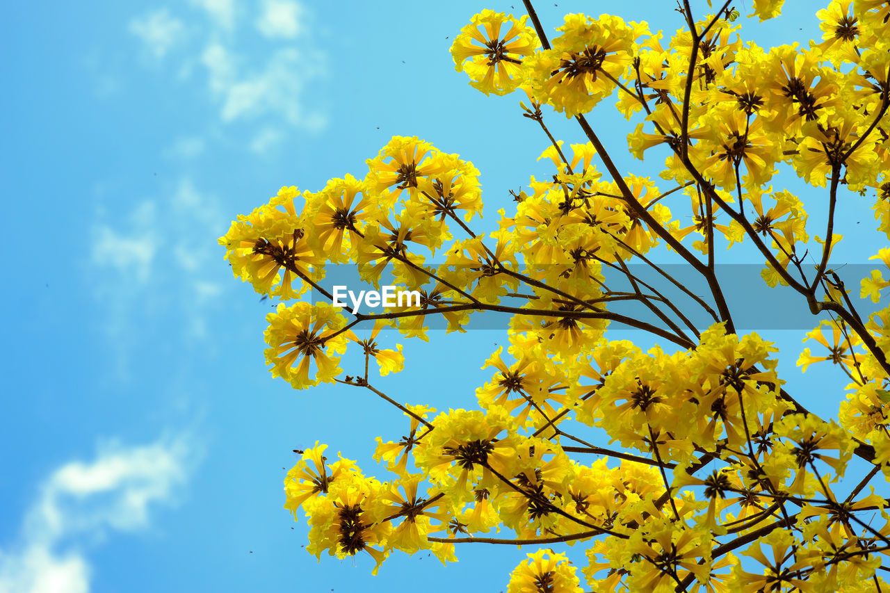 LOW ANGLE VIEW OF FLOWERING PLANT AGAINST YELLOW SKY