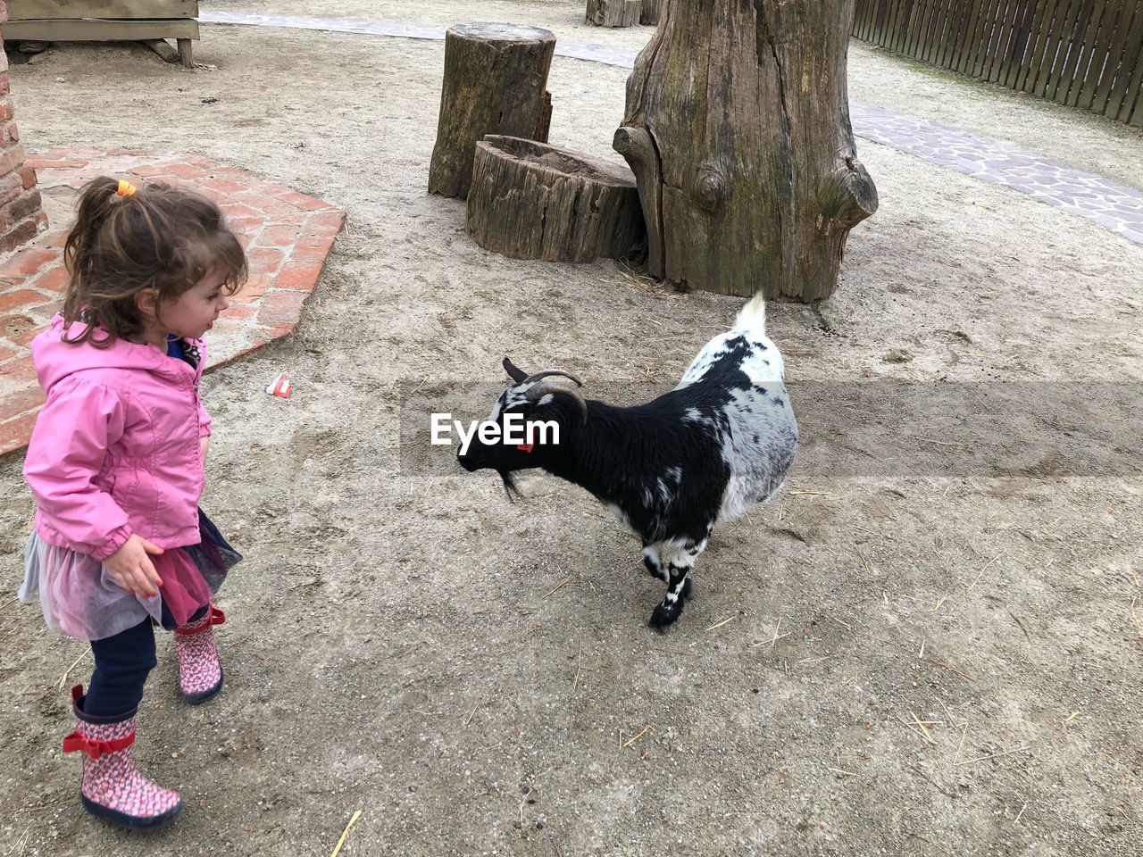 childhood, domestic, pets, domestic animals, one animal, full length, mammal, vertebrate, females, child, girls, canine, dog, women, day, standing, casual clothing, real people, innocence, outdoors, warm clothing