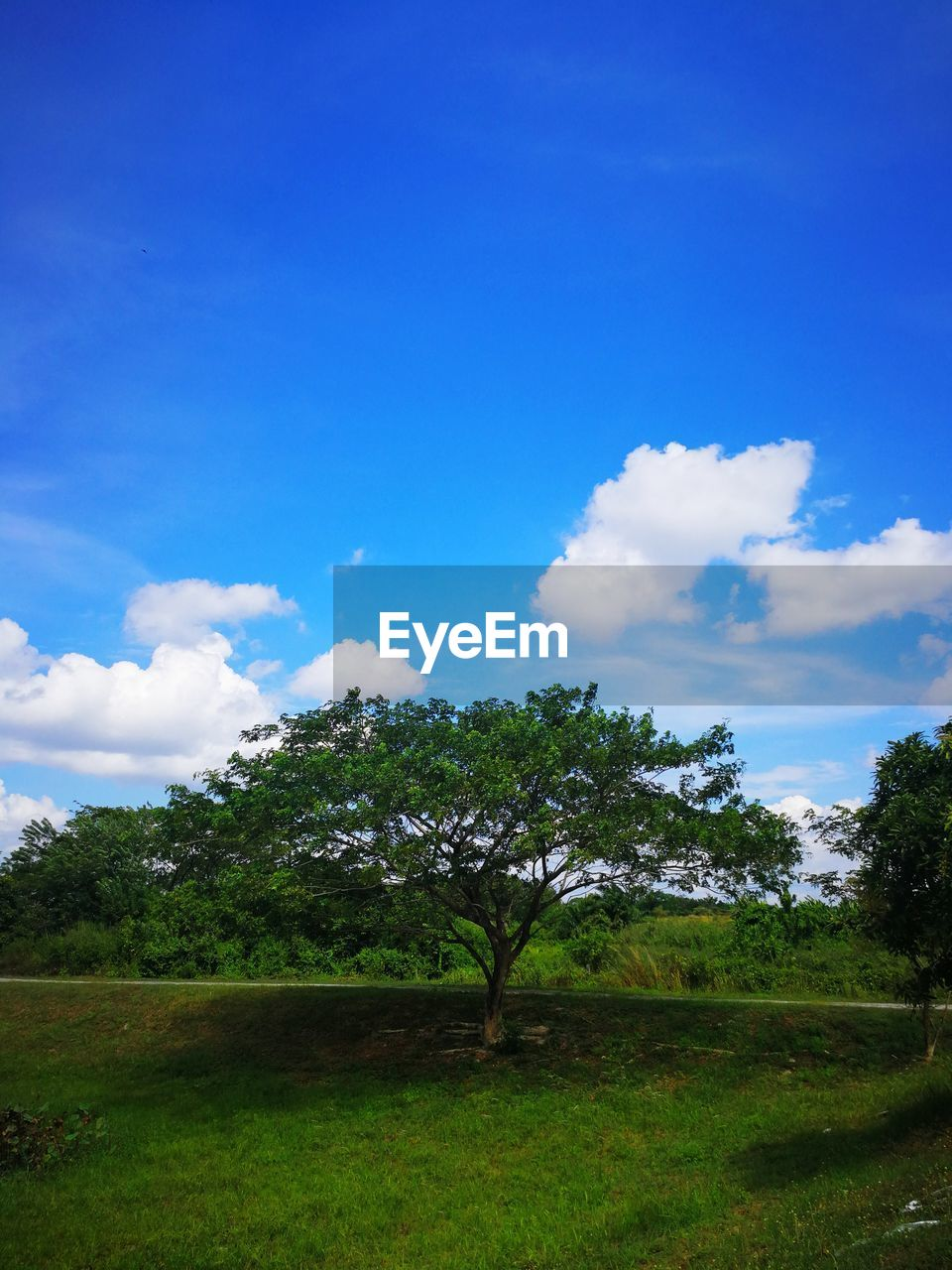 sky, cloud - sky, tree, plant, tranquility, tranquil scene, land, beauty in nature, field, landscape, environment, grass, nature, growth, green color, scenics - nature, day, blue, no people, non-urban scene, outdoors