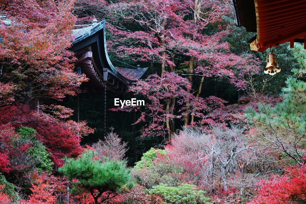 House amidst autumn trees