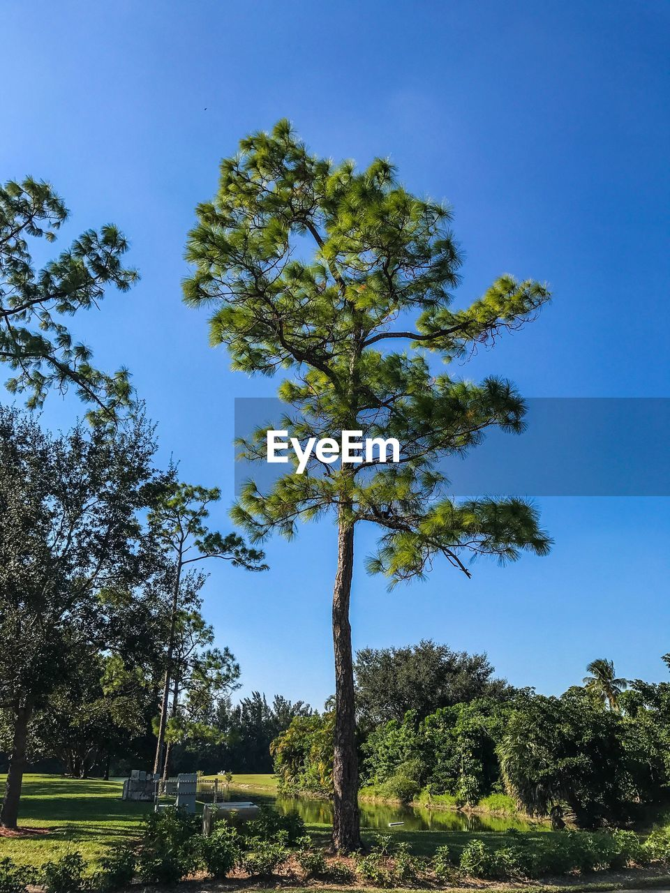 tree, growth, nature, day, blue, tranquility, sky, no people, low angle view, beauty in nature, outdoors, tranquil scene, scenics, green color, clear sky, tree trunk, branch, landscape, grass