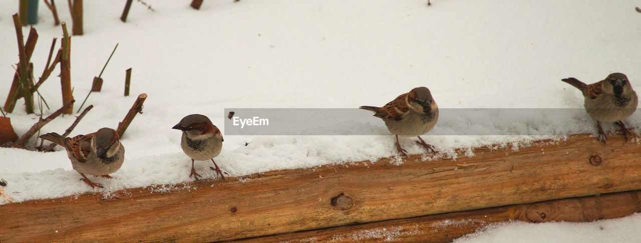 bird, animal themes, animals in the wild, nature, no people, animal wildlife, young bird, day, outdoors, snow, water