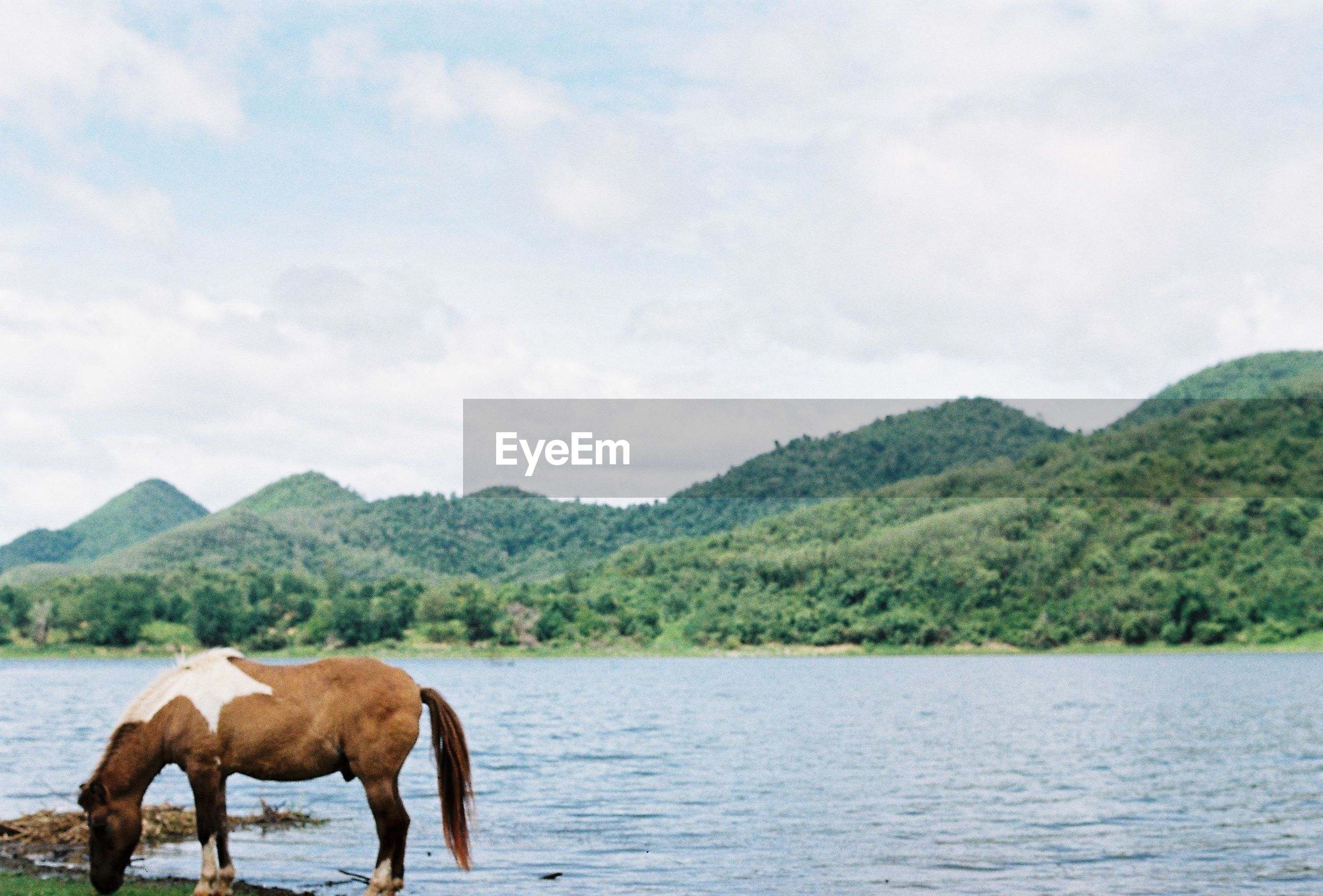 HORSE IN A LAKE AGAINST MOUNTAIN
