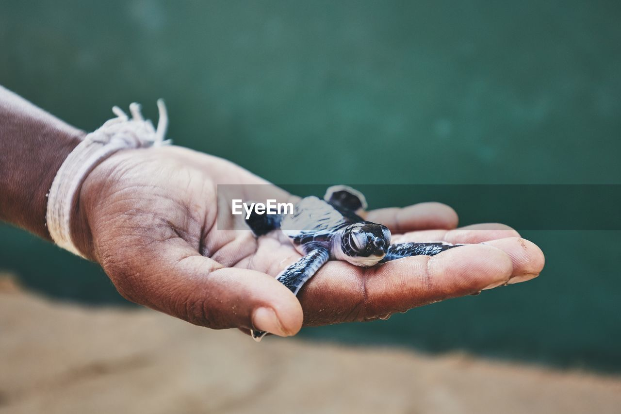 human hand, hand, human body part, holding, one person, real people, focus on foreground, day, close-up, body part, leisure activity, finger, human finger, men, outdoors, nature, selective focus, lifestyles, watch, human limb