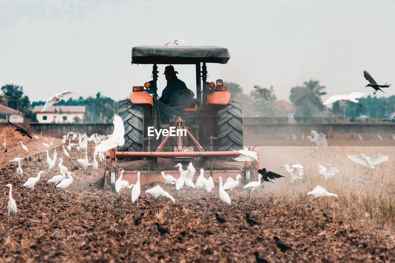 Man Driving Tractor On Field Amidst Bird