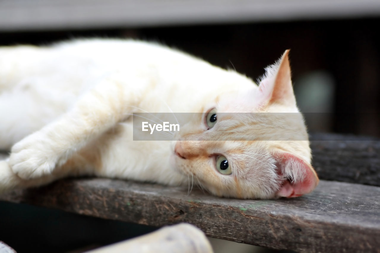 Close-up of cat lying on wood