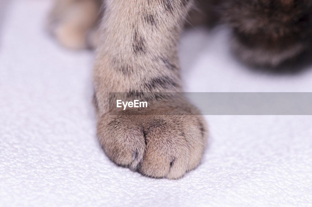 CLOSE-UP OF CAT IN PEN