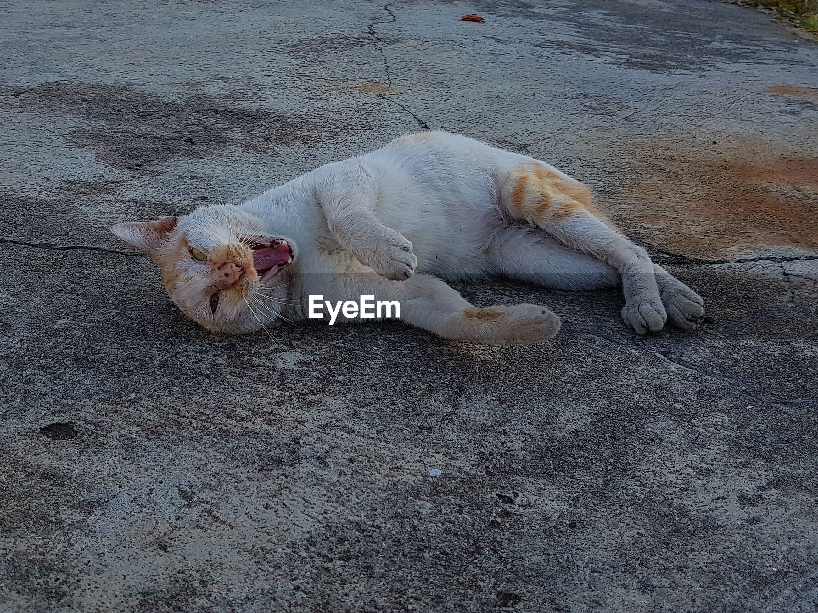 CAT SLEEPING ON GROUND