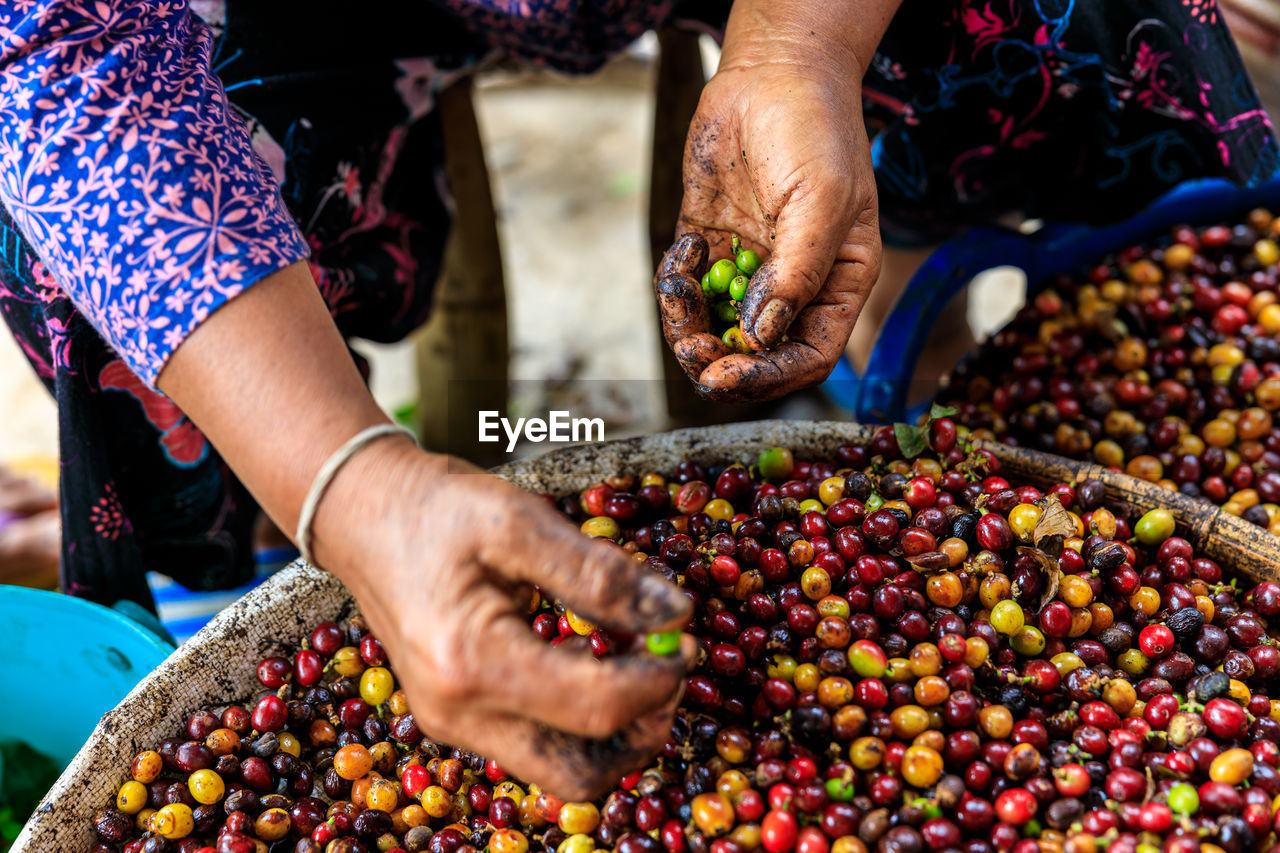 Midsection of farmers working cut out coffee bean