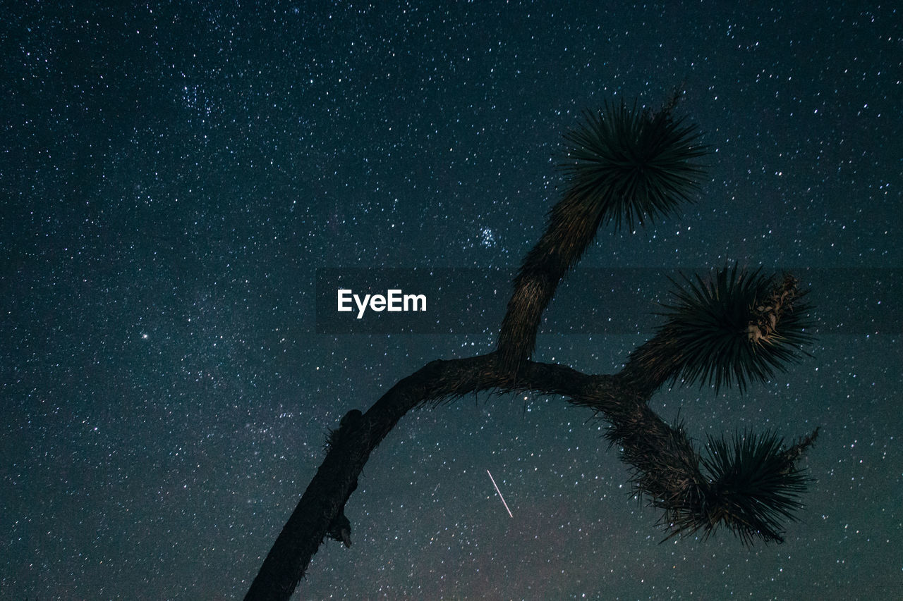 night, tree, low angle view, palm tree, no people, sky, outdoors, tree trunk, nature, beauty in nature, scenics, star - space, galaxy