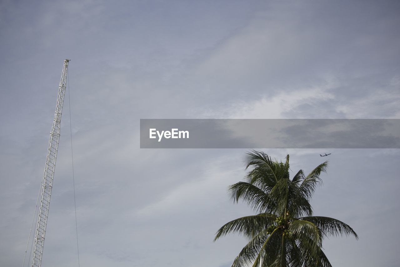 Low Angle View Of Coconut Palm Tree And Crane Against Sky