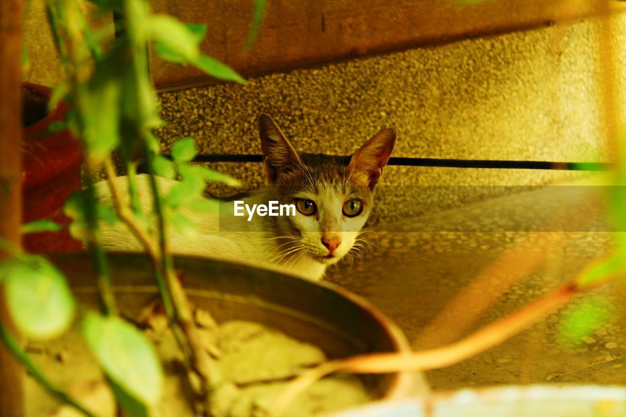 domestic, pets, domestic animals, animal themes, cat, mammal, domestic cat, animal, one animal, feline, vertebrate, focus on background, looking at camera, selective focus, portrait, no people, plant, nature, plant part, leaf, animal head, whisker, animal eye