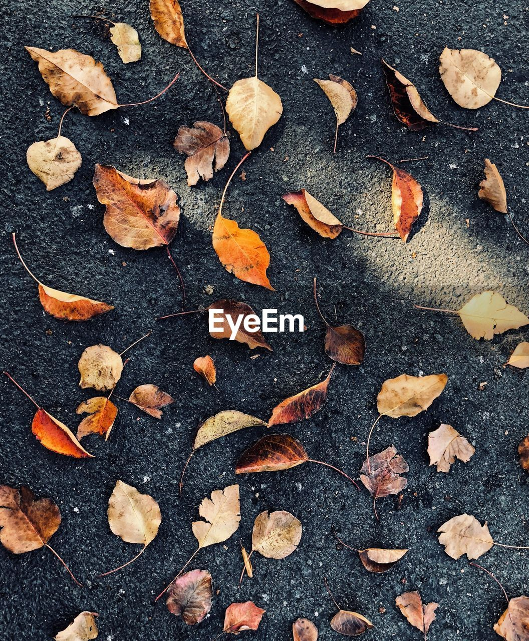 autumn, leaf, dry, change, full frame, large group of objects, backgrounds, no people, nature, close-up, day, outdoors, food, maple, freshness