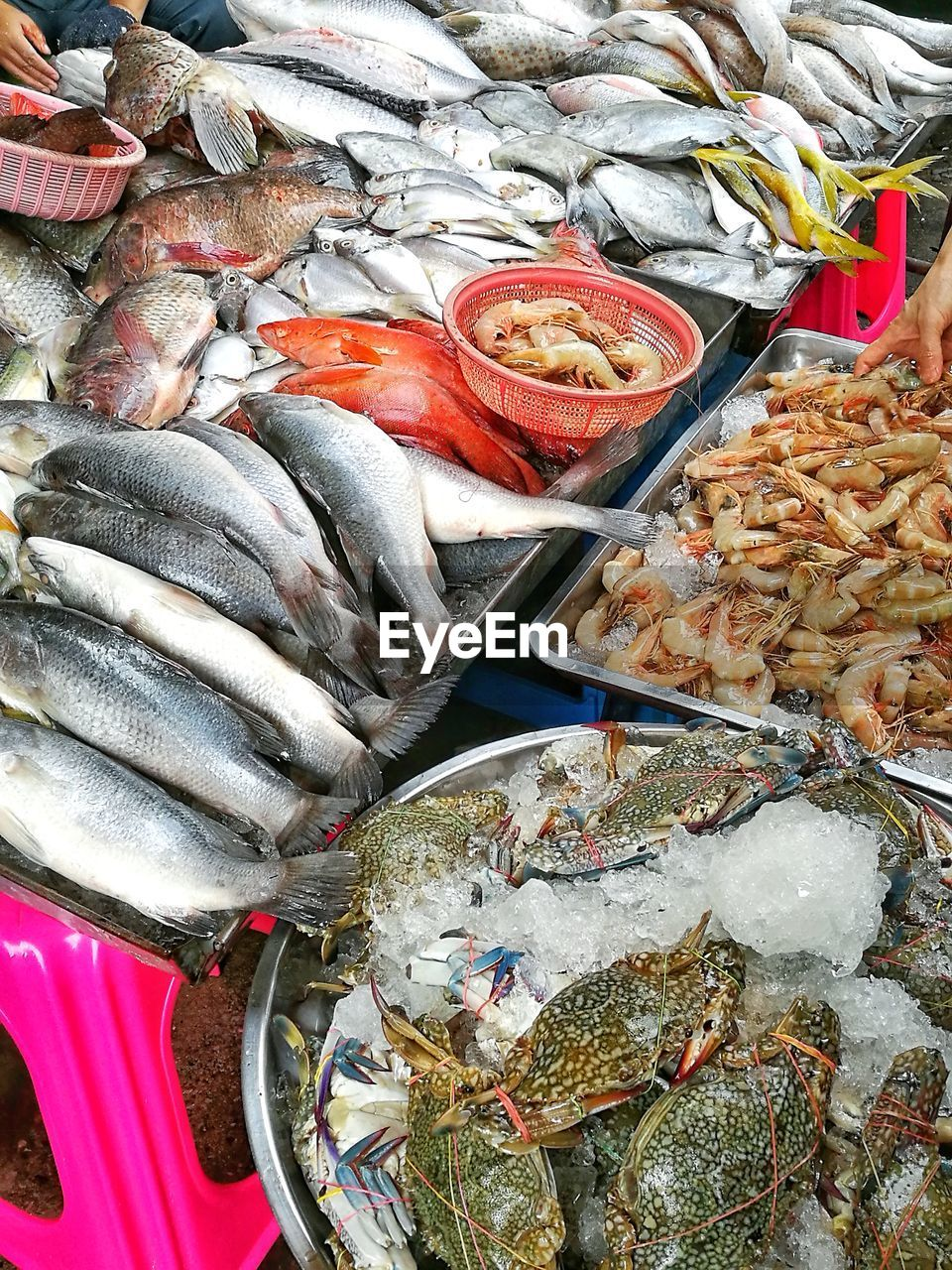 seafood, food and drink, food, freshness, fish, prawn, healthy eating, raw food, no people, indoors, day, ready-to-eat, close-up