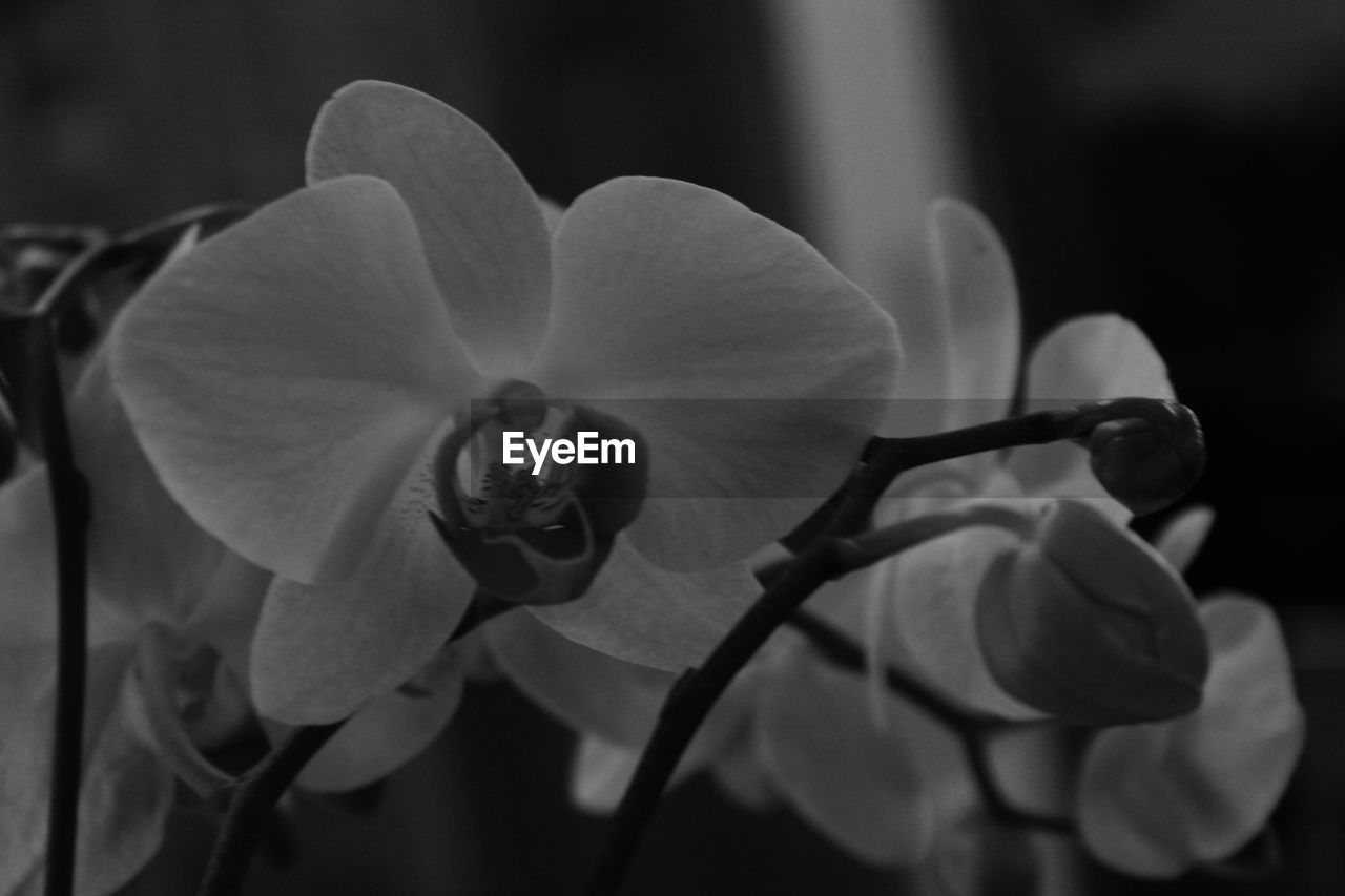 flower, petal, nature, beauty in nature, plant, growth, focus on foreground, outdoors, flower head, close-up, no people, fragility, blooming, day, freshness