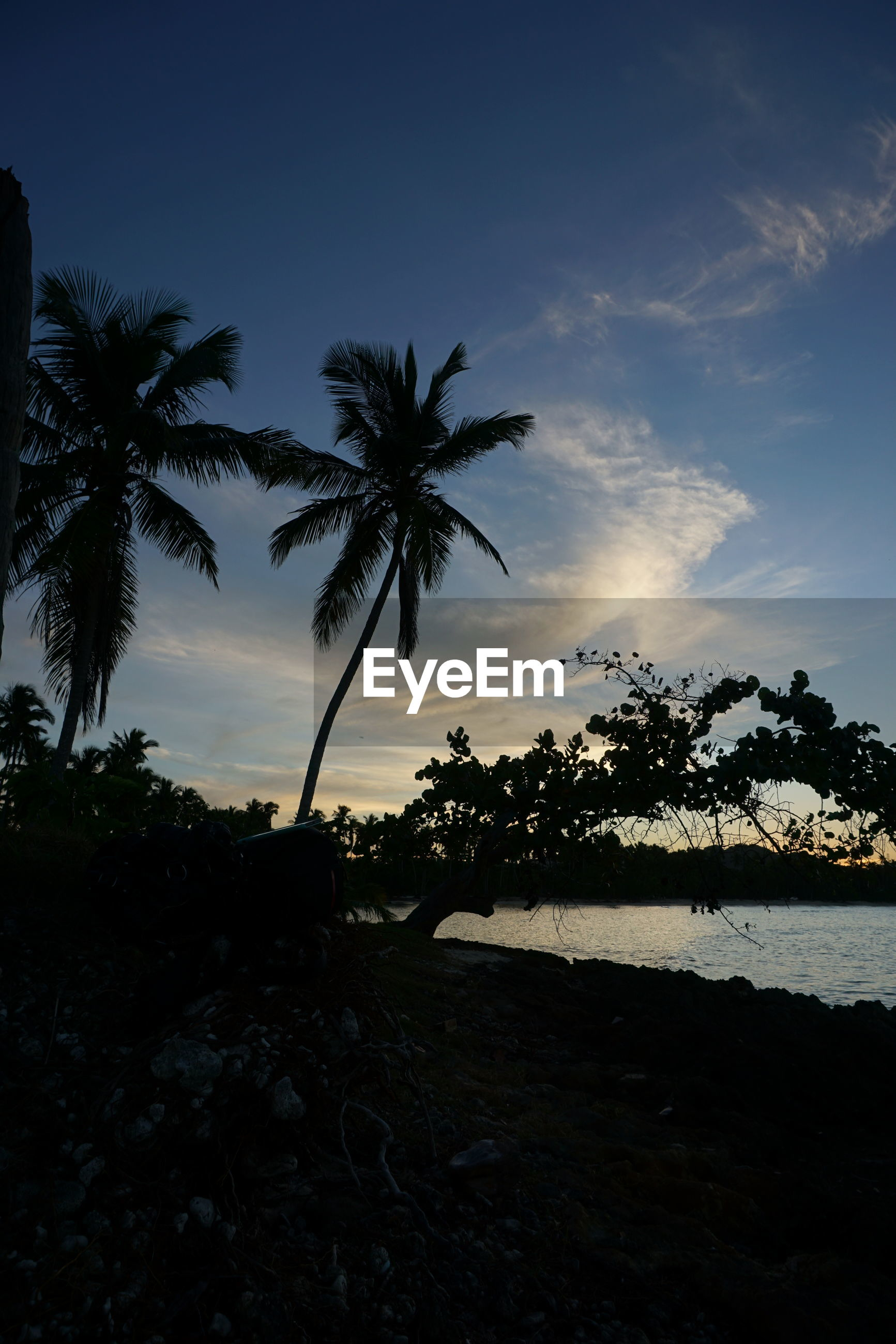 SILHOUETTE OF PALM TREES AT BEACH AGAINST SKY
