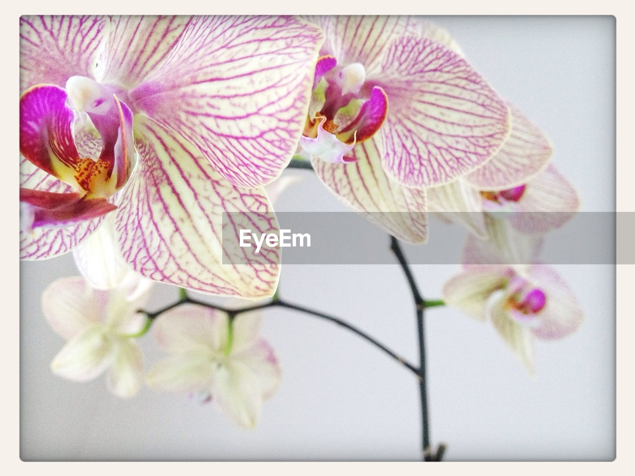 flower, petal, freshness, fragility, flower head, beauty in nature, growth, transfer print, close-up, nature, pink color, blooming, stamen, orchid, auto post production filter, plant, pollen, in bloom, blossom, stem