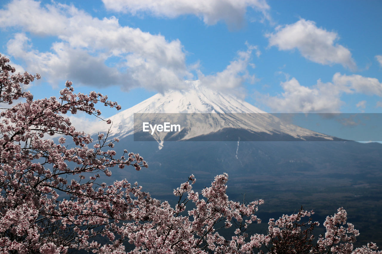 Scenic View Of Mount Fuji And Cherry Blossom