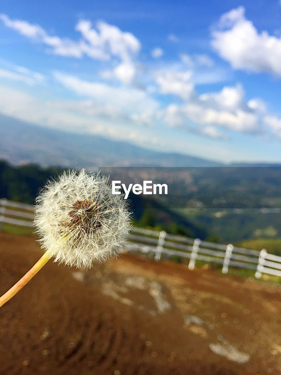 plant, beauty in nature, flower, sky, cloud - sky, flowering plant, nature, freshness, dandelion, day, close-up, focus on foreground, fragility, no people, growth, vulnerability, mountain, outdoors, inflorescence, flower head, softness, dandelion seed
