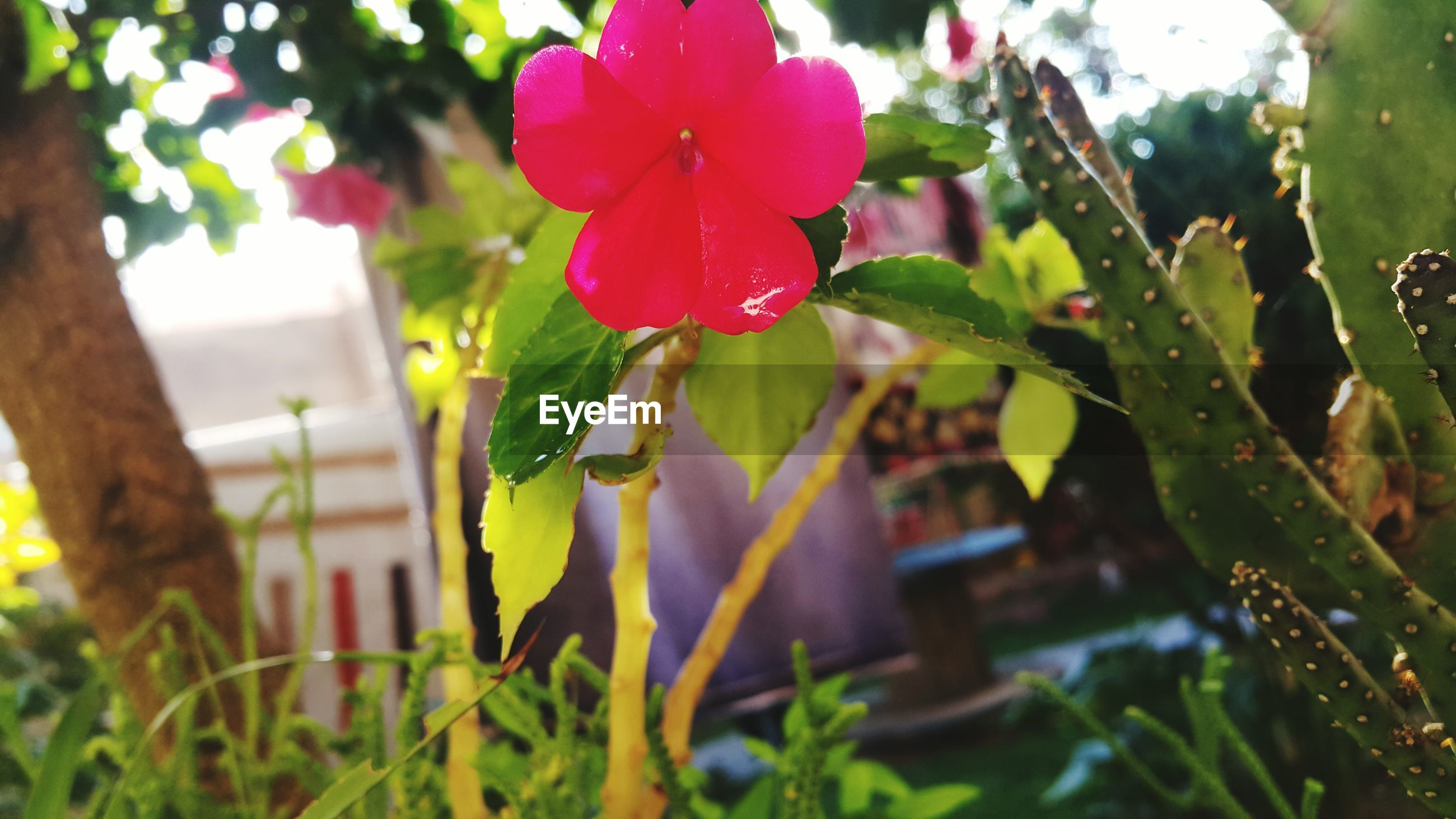 growth, plant, flower, leaf, freshness, focus on foreground, close-up, fragility, nature, beauty in nature, front or back yard, petal, blooming, day, outdoors, green color, stem, selective focus, no people, growing