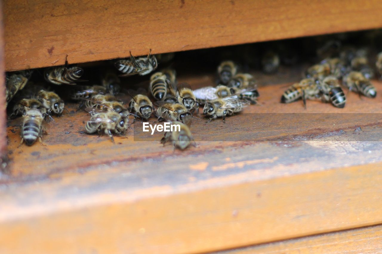 group of animals, animal themes, animal, animal wildlife, apiculture, animals in the wild, bee, beehive, invertebrate, insect, large group of animals, selective focus, close-up, wood - material, honey bee, day, beauty in nature, no people, zoology, nature