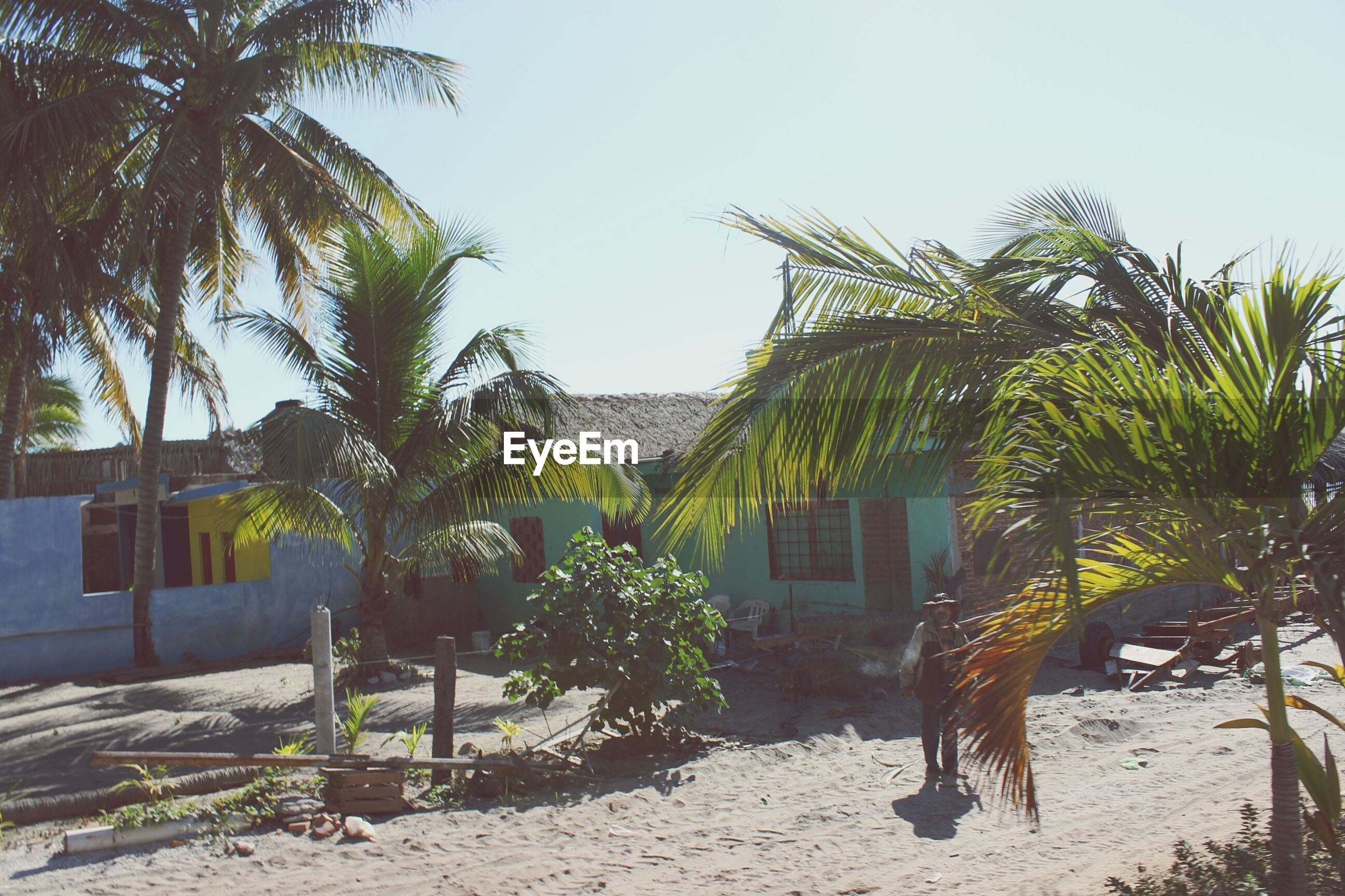 palm tree, tree, clear sky, beach, sand, building exterior, growth, built structure, architecture, sunlight, sky, nature, tranquility, day, thatched roof, shadow, sea, tranquil scene, coconut palm tree, house