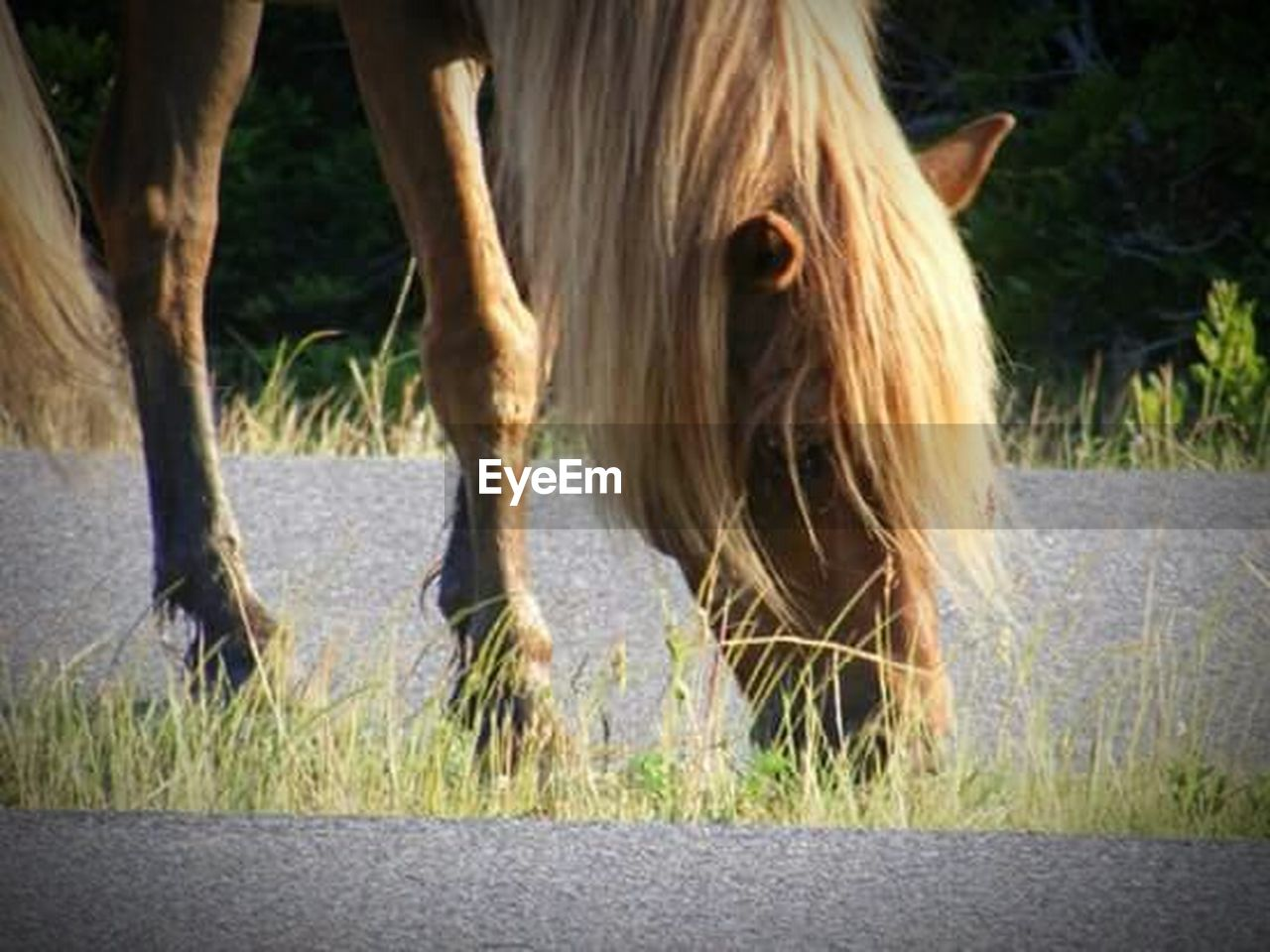 horse, animal themes, one animal, domestic animals, grass, mane, outdoors, day, mammal, animal hair, livestock, no people, nature, close-up