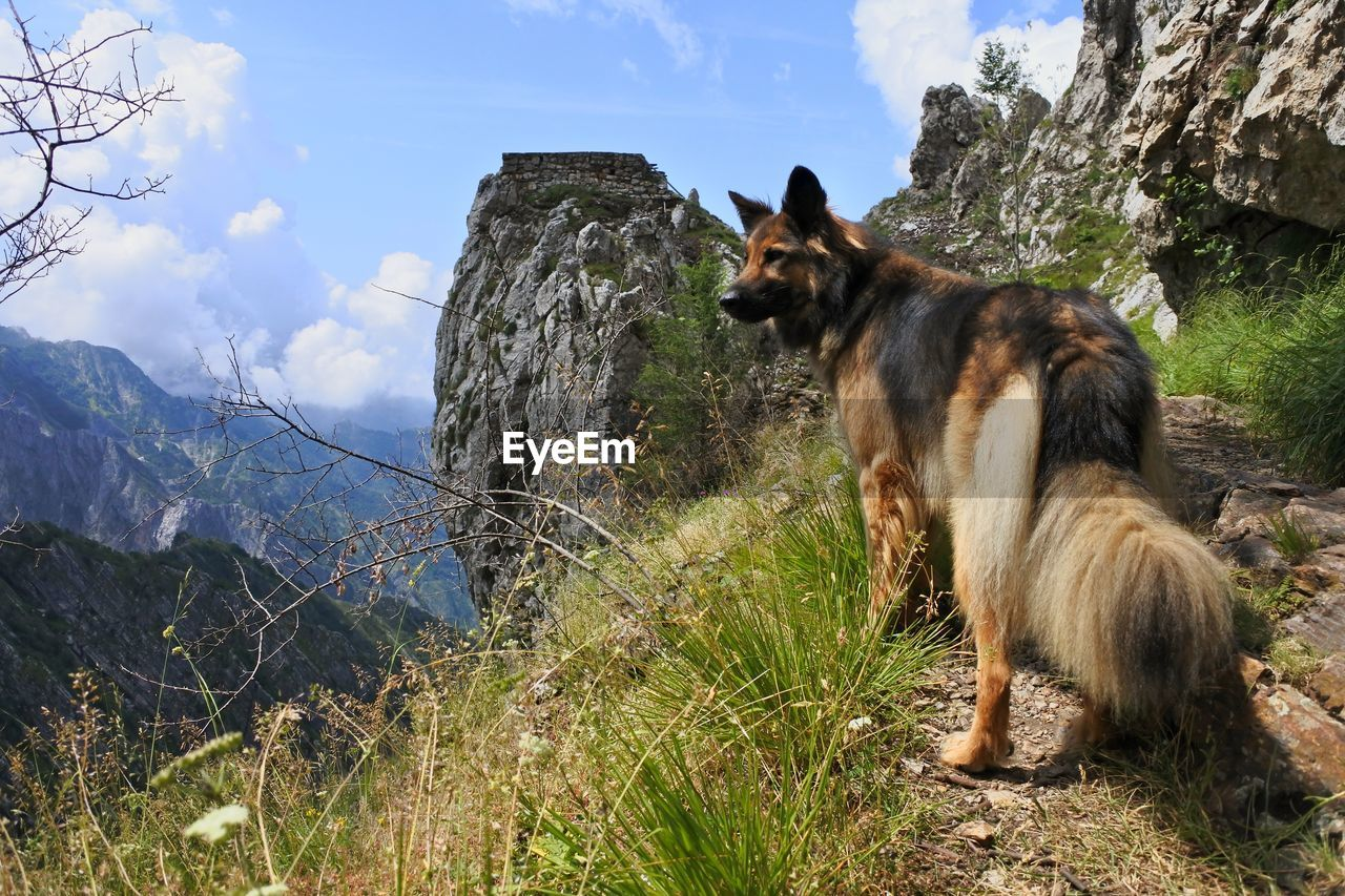 View of dog on mountains landscape