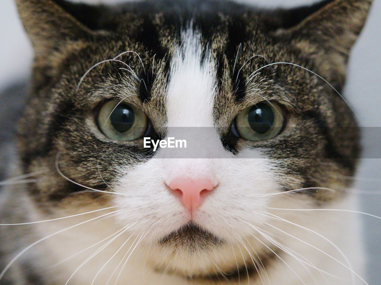 mammal, animal themes, cat, domestic, animal, pets, one animal, domestic animals, domestic cat, feline, vertebrate, close-up, whisker, portrait, animal body part, looking at camera, no people, indoors, animal head, focus on foreground, animal eye, snout, animal mouth