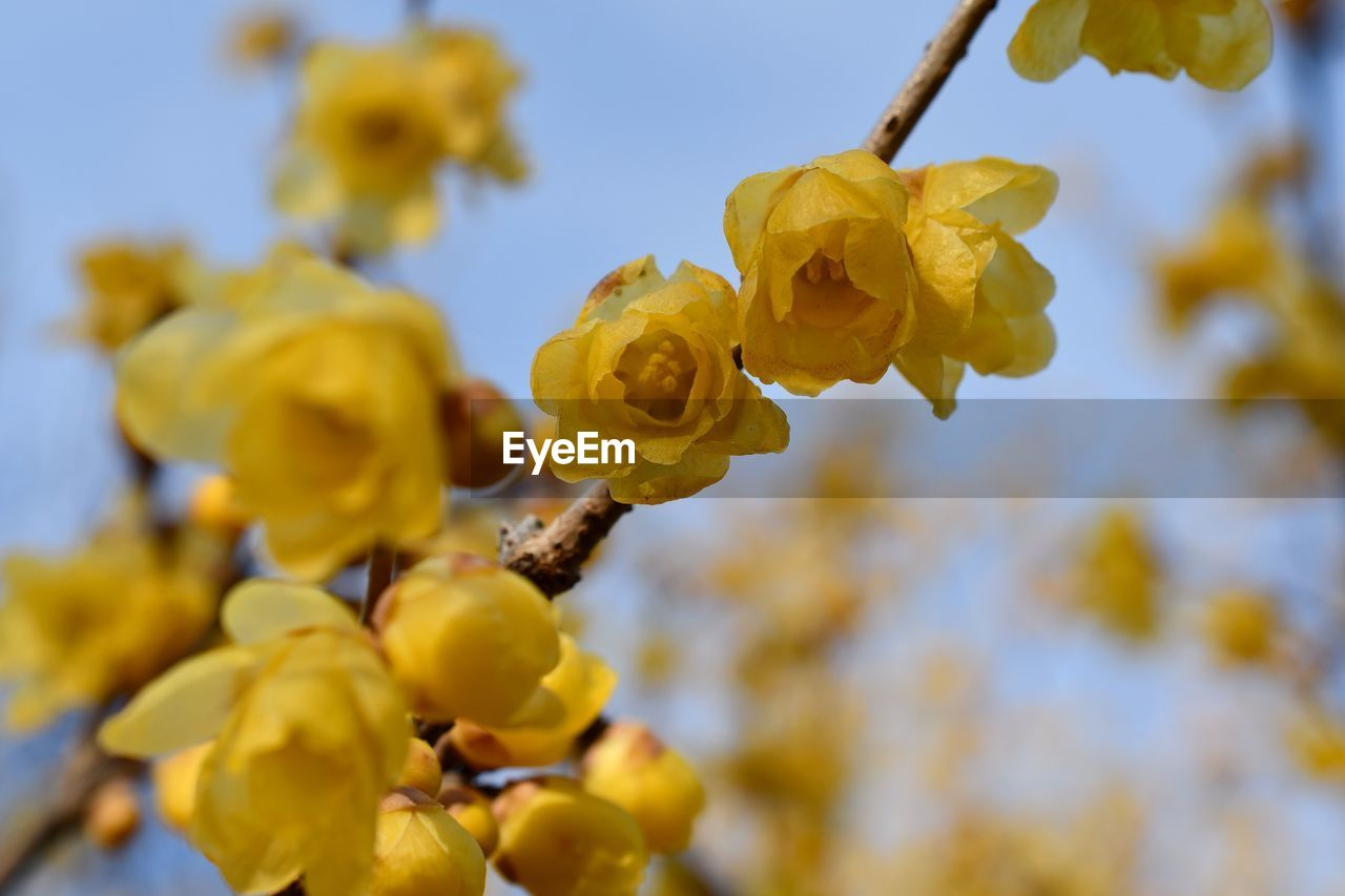 Low Angle View Of Yellow Flowering Plant