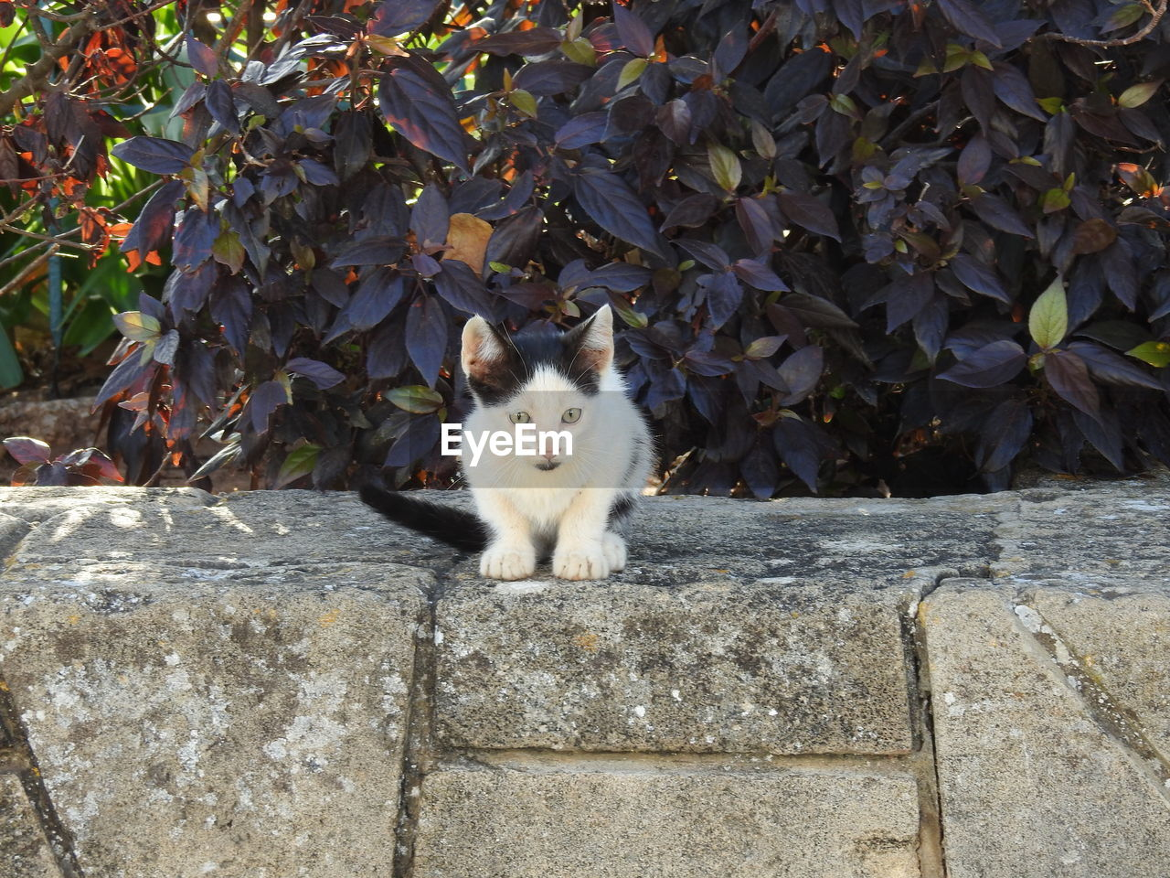 cat, domestic cat, one animal, animal themes, domestic, animal, feline, mammal, vertebrate, domestic animals, pets, portrait, looking at camera, nature, plant part, leaf, day, plant, no people, wall, outdoors, whisker, concrete