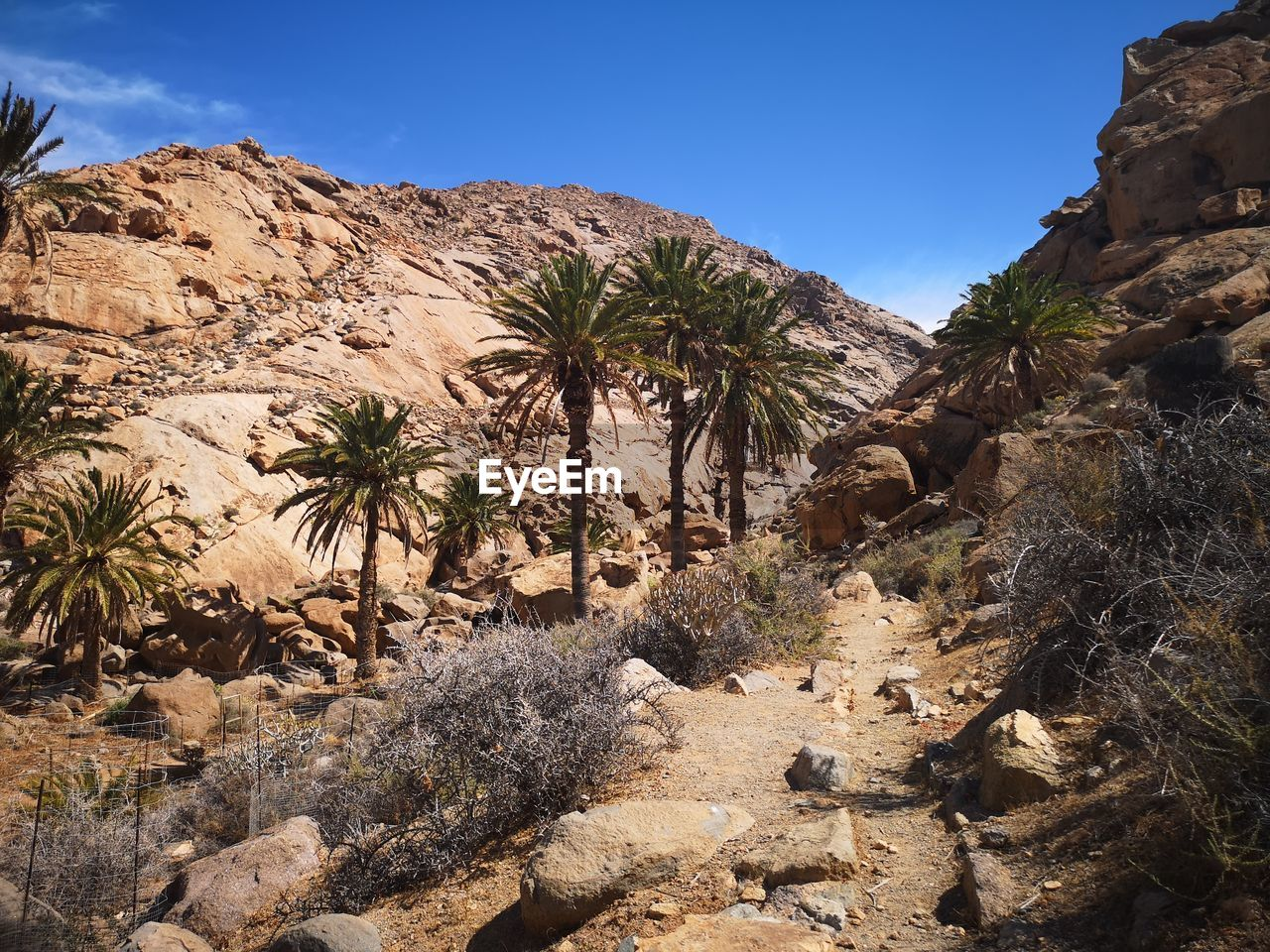 rock, solid, rock - object, sky, plant, rock formation, tree, nature, scenics - nature, tranquility, mountain, beauty in nature, tranquil scene, day, non-urban scene, palm tree, sunlight, physical geography, no people, land, arid climate, outdoors, climate, formation, eroded